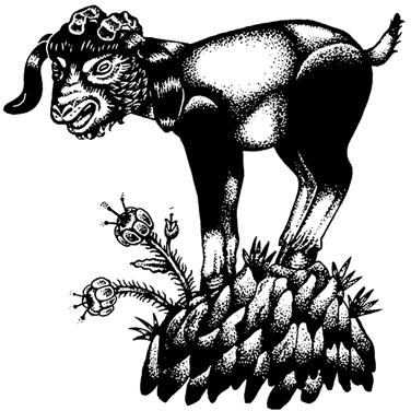 Goat Illustation by Jade Sturms