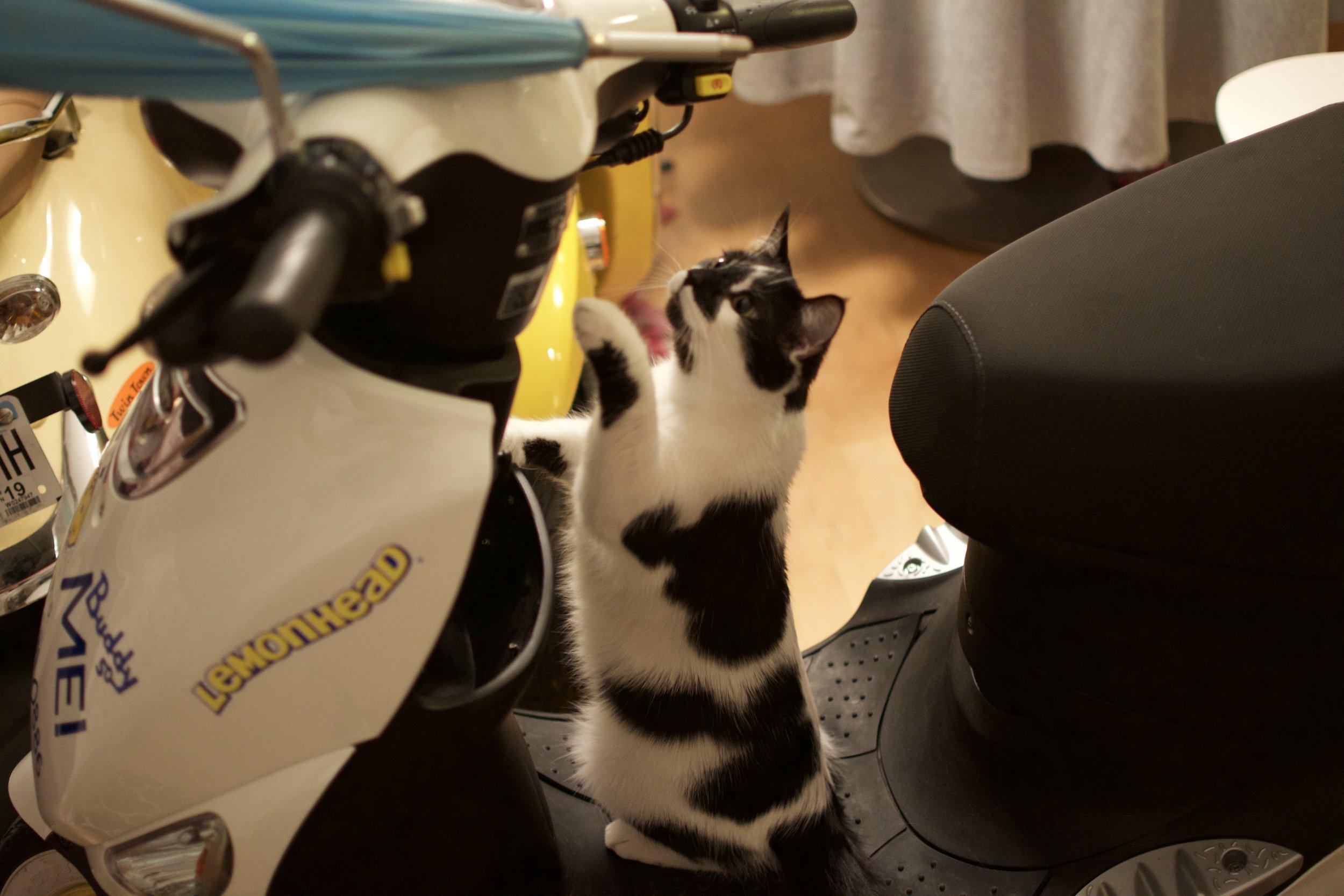 Broski  (he thinks he's a mechanic..he's not)