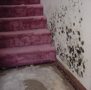 mold+remediation.png