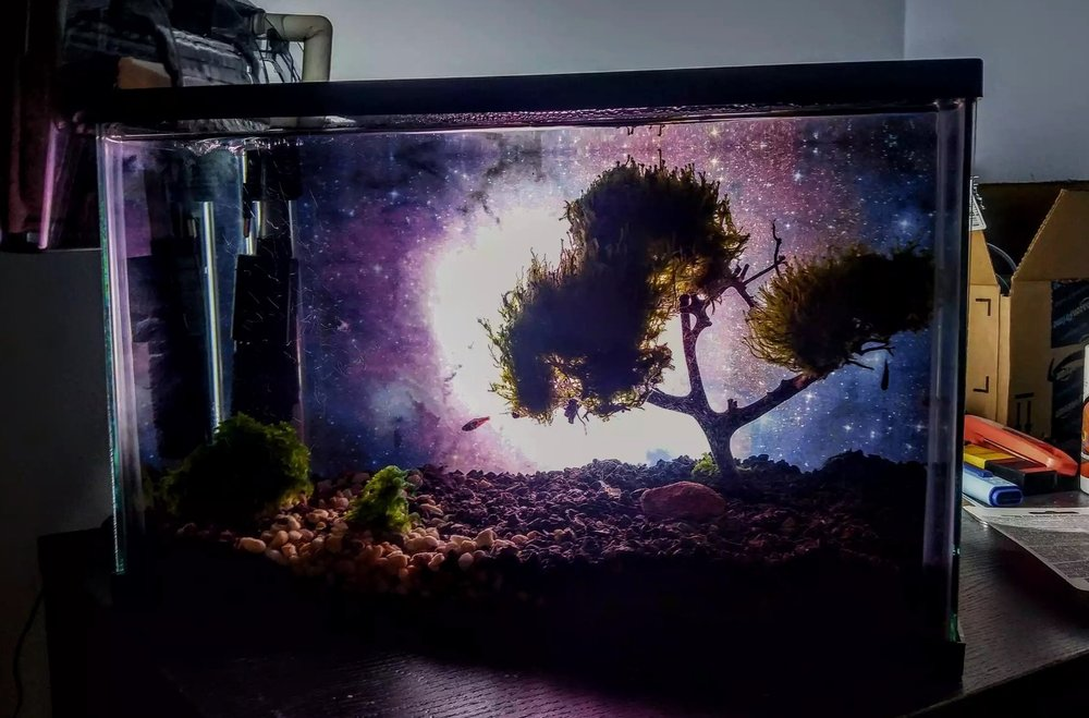 Moss Bonsai Tree Aquarium Michael Chatzidakis
