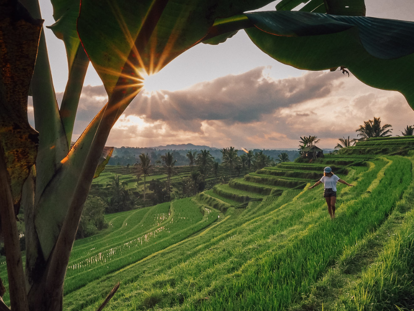 Jatiluwih - Jatiluwih rice terraces pretty much cover the region of the namesake upland village in West Bali, most famous for its landscapes that are both dramatic and truly exotic.