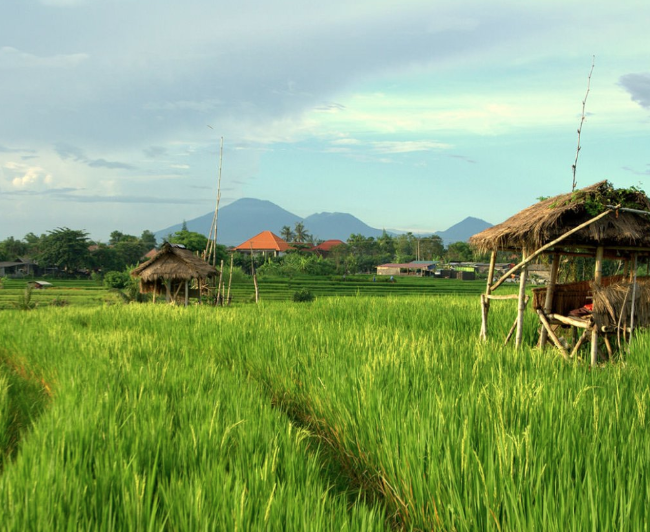Perenanan - Pererenan is one of several farming villages in Canggu which offers a pleasant drive along its main road, with expanses of rice fields on both sides