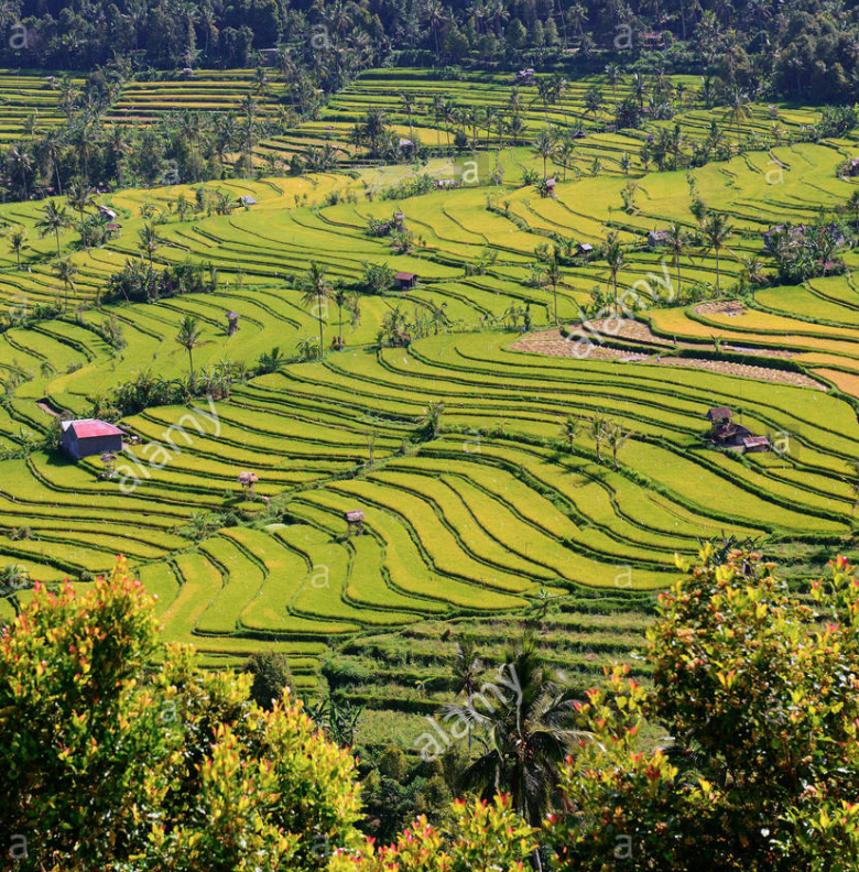 Munduk - Besides being home to one of Bali's most scenic waterfalls, the highland region of Munduk features a wonderful expanse of rice paddies