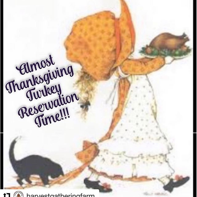 Getting closer to my favorite purchase all year!! Get a turkey from @harvestgatheringfarm you won't regret it. #Repost @harvestgatheringfarm with @get_repost ・・・ Getting ready to start our Thanksgiving Turkey 🦃 Reservations! I usually start end of August and sell out by October. Only raising 75 pastured turkeys 🦃 this year! It's definitely a labor of love ❤️ #thanksgivingturkeys #laboroflove #pastureraised