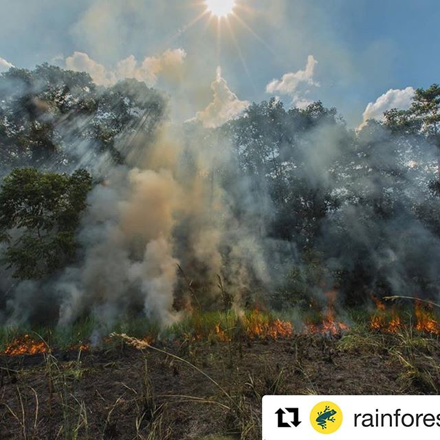 @rainforestalliance rainforestalliance with @get_repost ・・・ 🚨Amazon S.O.S. Part II🚨  Many members of our alliance have been asking what actions we are taking in response to the crisis in the Brazilian Amazon (which is now spreading into Bolivia and a region of the Peruvian Amazon where our longstanding partner communities live; 🔥 knows no borders). In addition to redirecting 100% of donations made in August via link in bio to frontline groups in the Brazilian Amazon, we are mobilizing our global alliance for a vigorous, multi-faceted crisis response. We're working with our partners—including multi-national companies, farmers, governments, scientists, and Indigenous and forest communities around the world—to put pressure on the Brazilian government to conserve the Amazon for the good of people and nature. 🌎That means, first and foremost, defending it against illegal logging, destructive slash-and-burn agriculture, and other existential threats.  In addition, we're harnessing international concern over the fires to intensify our ongoing advisory work with companies that source commodities from Brazil; leveraging our position as respected expert-advocates to advance responsive policy and regulation within the European Union to influence the Brazilian government; and urging business leaders around the world to embrace the Accountability Framework initiative, which provides guidance and benchmarks for sustainable supply-chain transformation. 💚 Work is love made visible, and we have infinite love for the Amazon. 🌳 📷 @mohsinkazmitakespictures (Amazon, Brazil-Peru border, 2015) #prayforamazonia #savetheamazon #rainforestalliance #climatejustice #climateaction