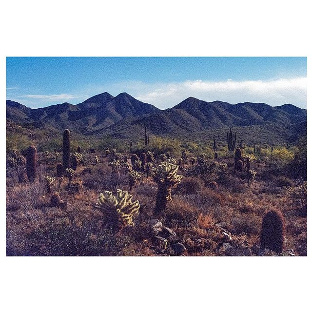 Westworld Arizona. • #yashica #kodakultramax400 #contaxzeiss #arizona #phoenix #35mmphotography