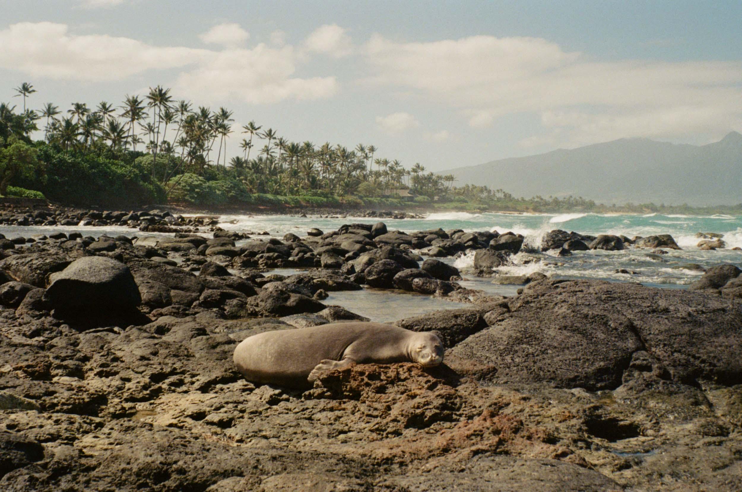 35mm_Maui-3.jpg