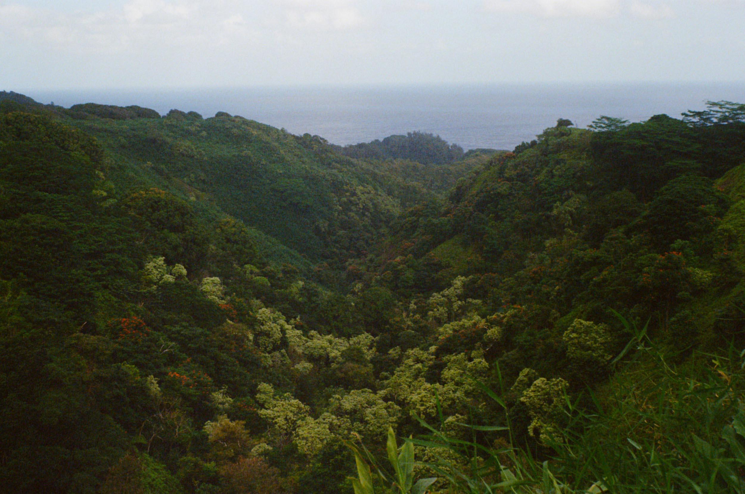 35mm_Maui-5.jpg