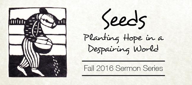 Current-Series-Seeds.jpg