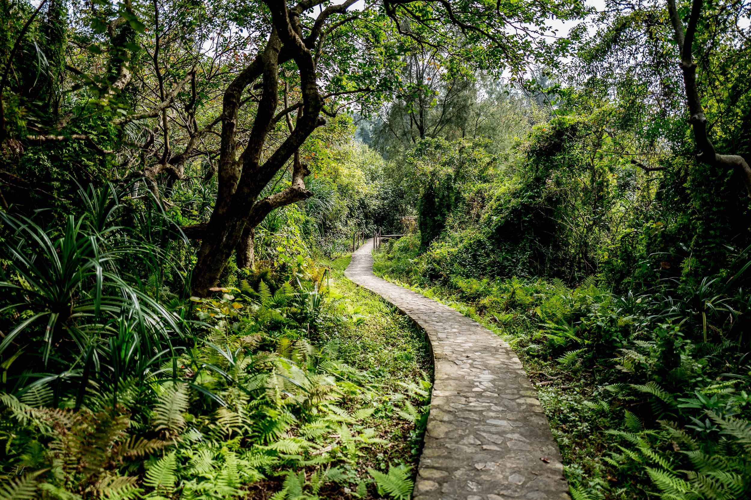 Peaceful Walk