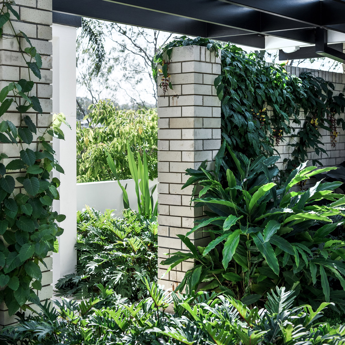 LANDSCAPE AUSTRALIA - Foliage fervour: Bungalow Garden Rooms Words by Ricky Ray Ricardo, Photography by Cathy Schusler