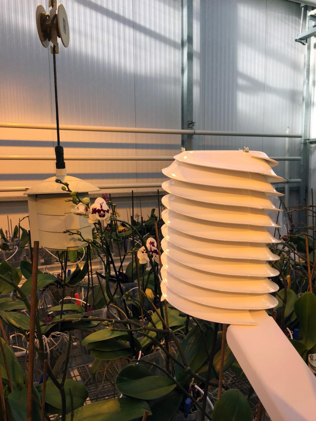 MeteoShield Professional solar radiation shield in Greenhouse