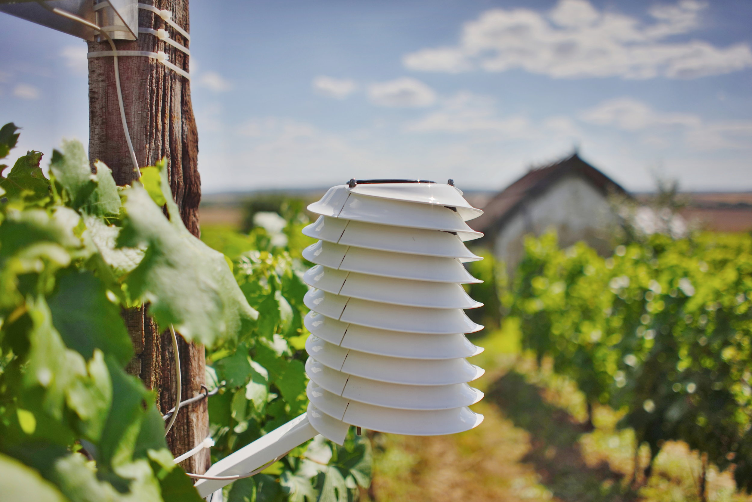 Professional weather station for viticulture