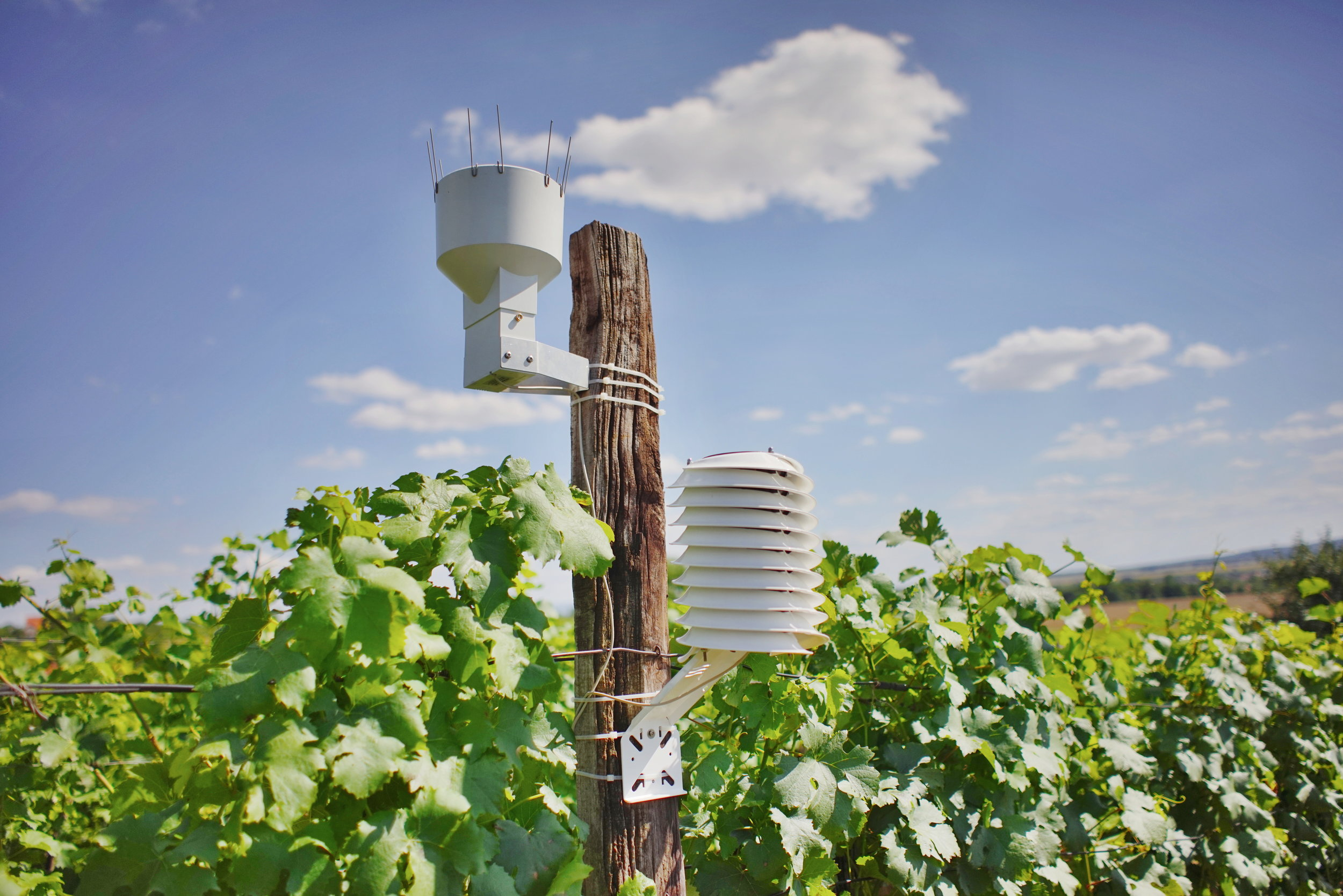 MeteoHelix IoT Pro weather station and rain gauge at a wine yard