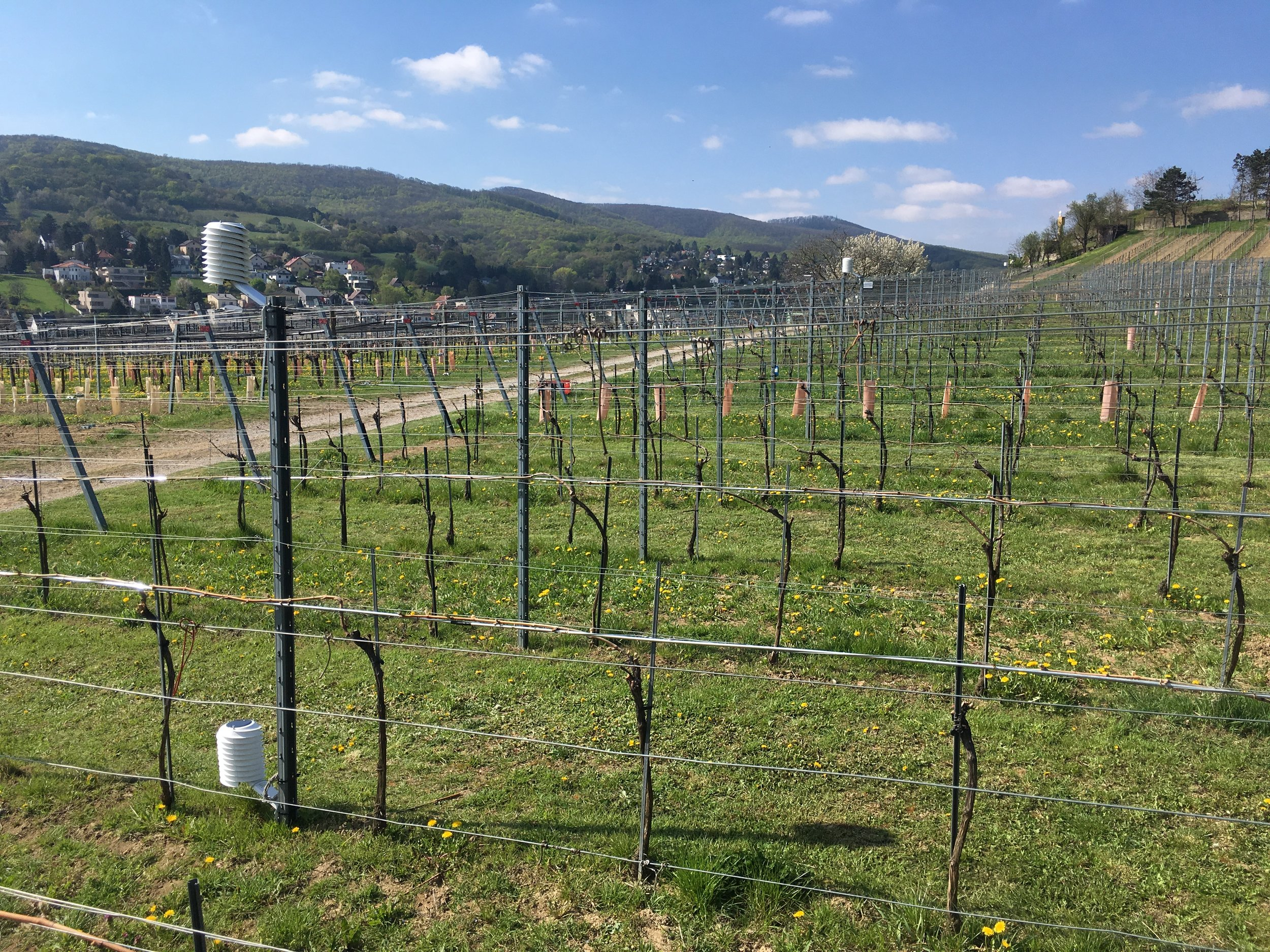 MeteoHelix weather stations monitoring ground frost in precision viticulture at the Hö­he­re Bun­des­lehr­an­stalt school in Klosterneuburg near Vienna, Austria.
