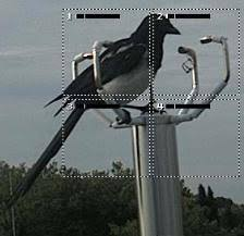 Bird sitting on an ultrasonic anemometer. [1]