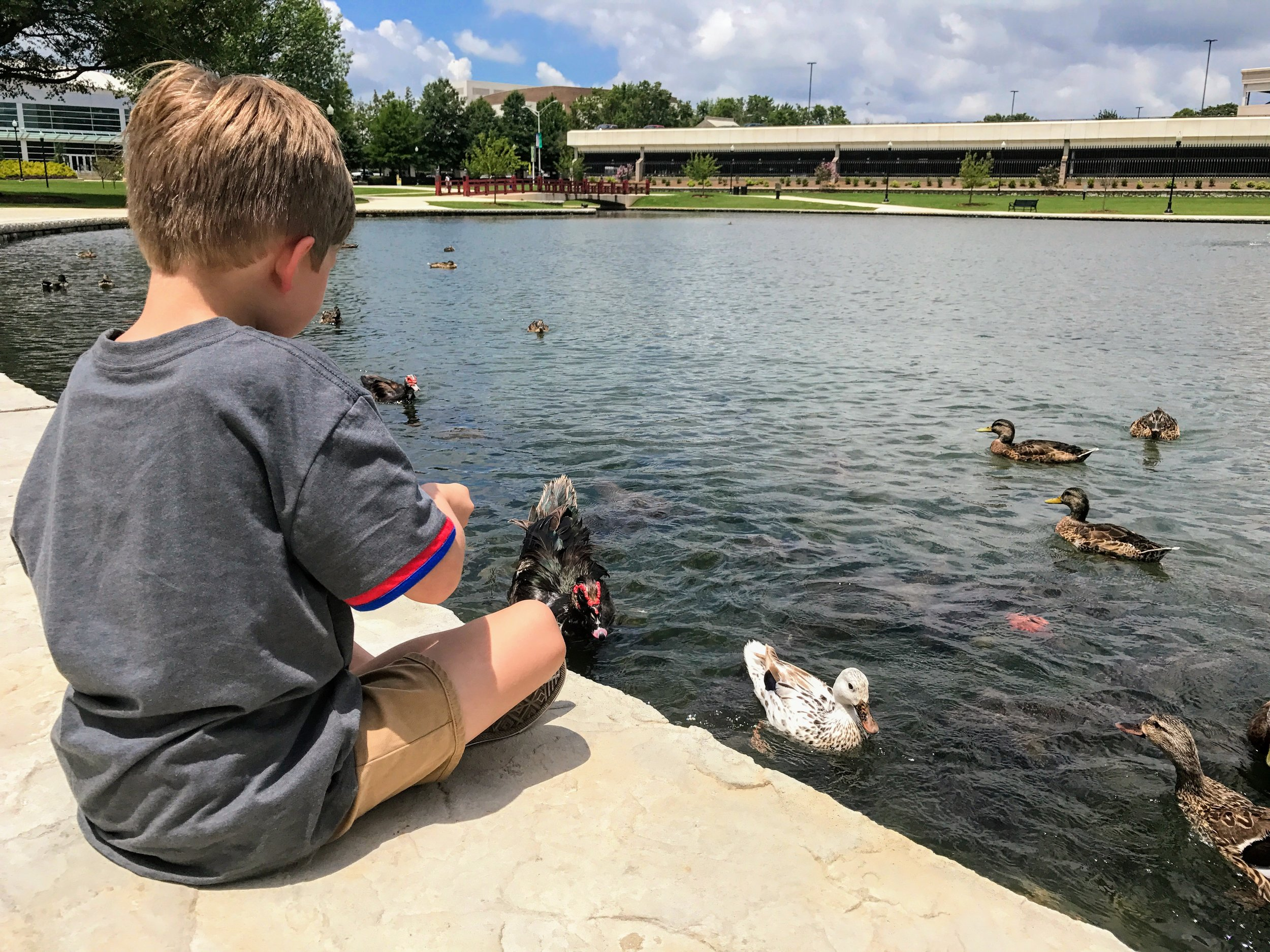 Fierce fowl at Big Spring Park