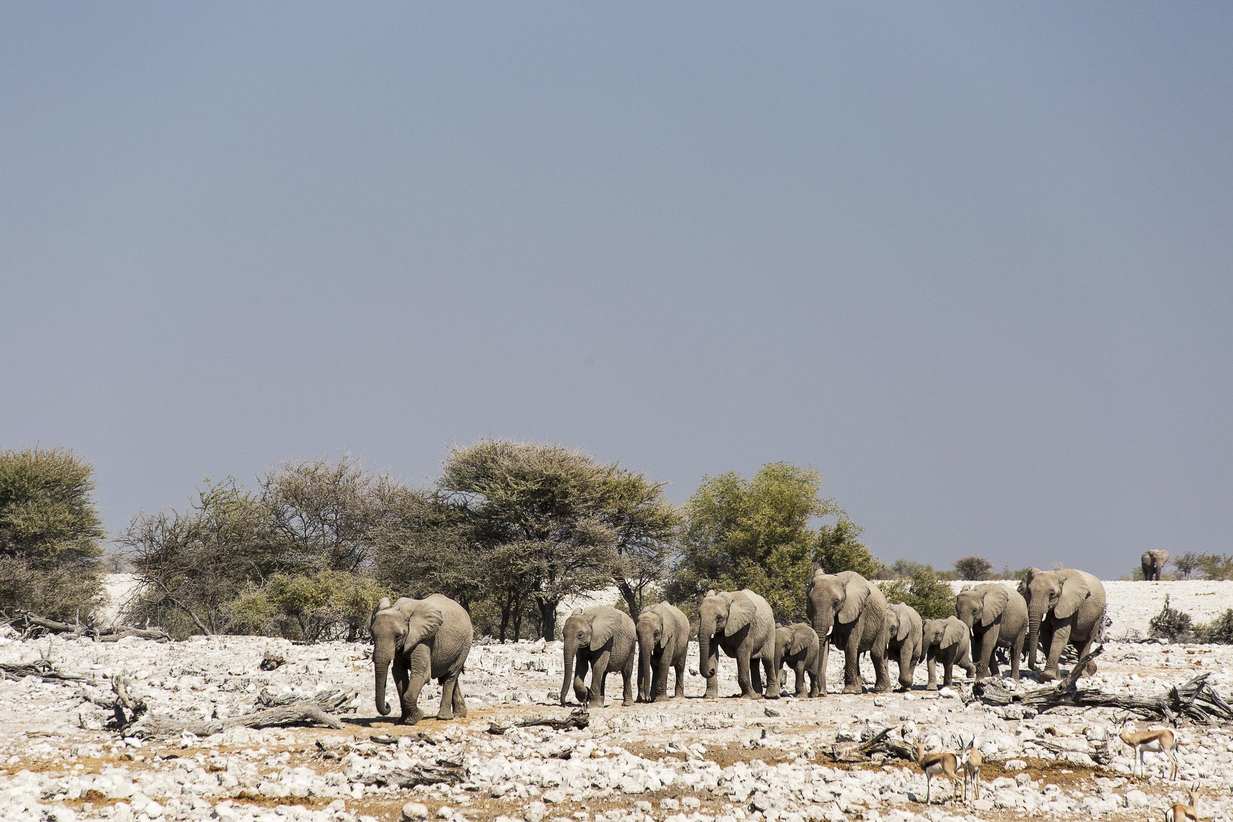 yoga retreat namibia africa etosha national park