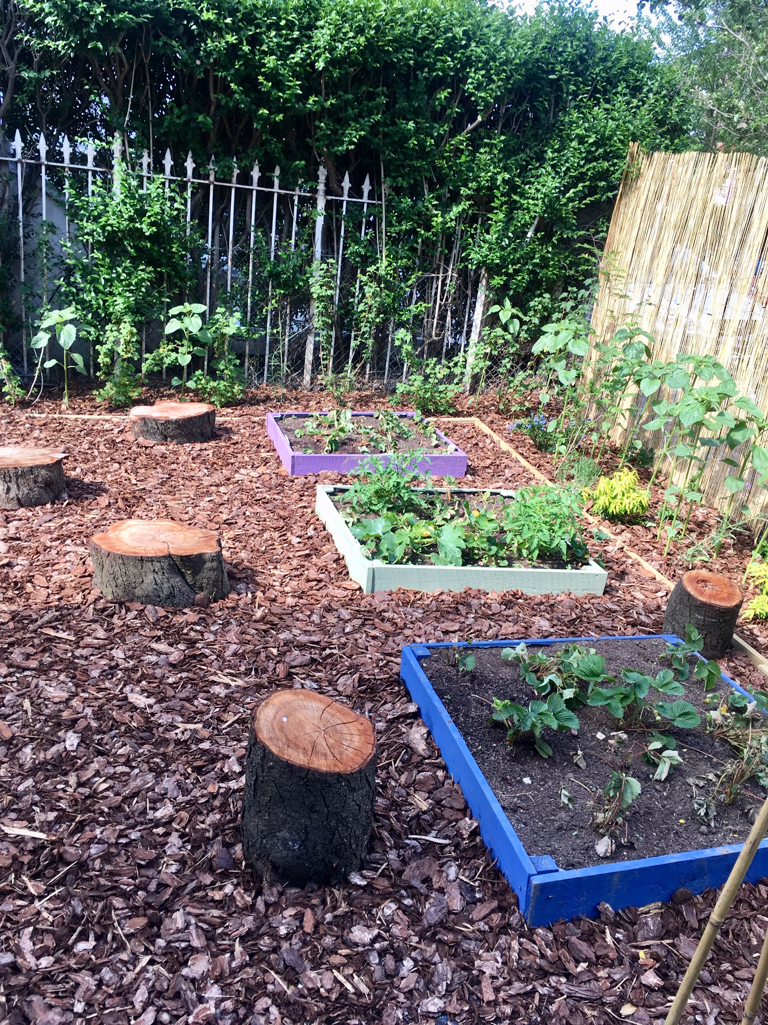 Our growing garden is full of herbs, strawberries and other exciting plants