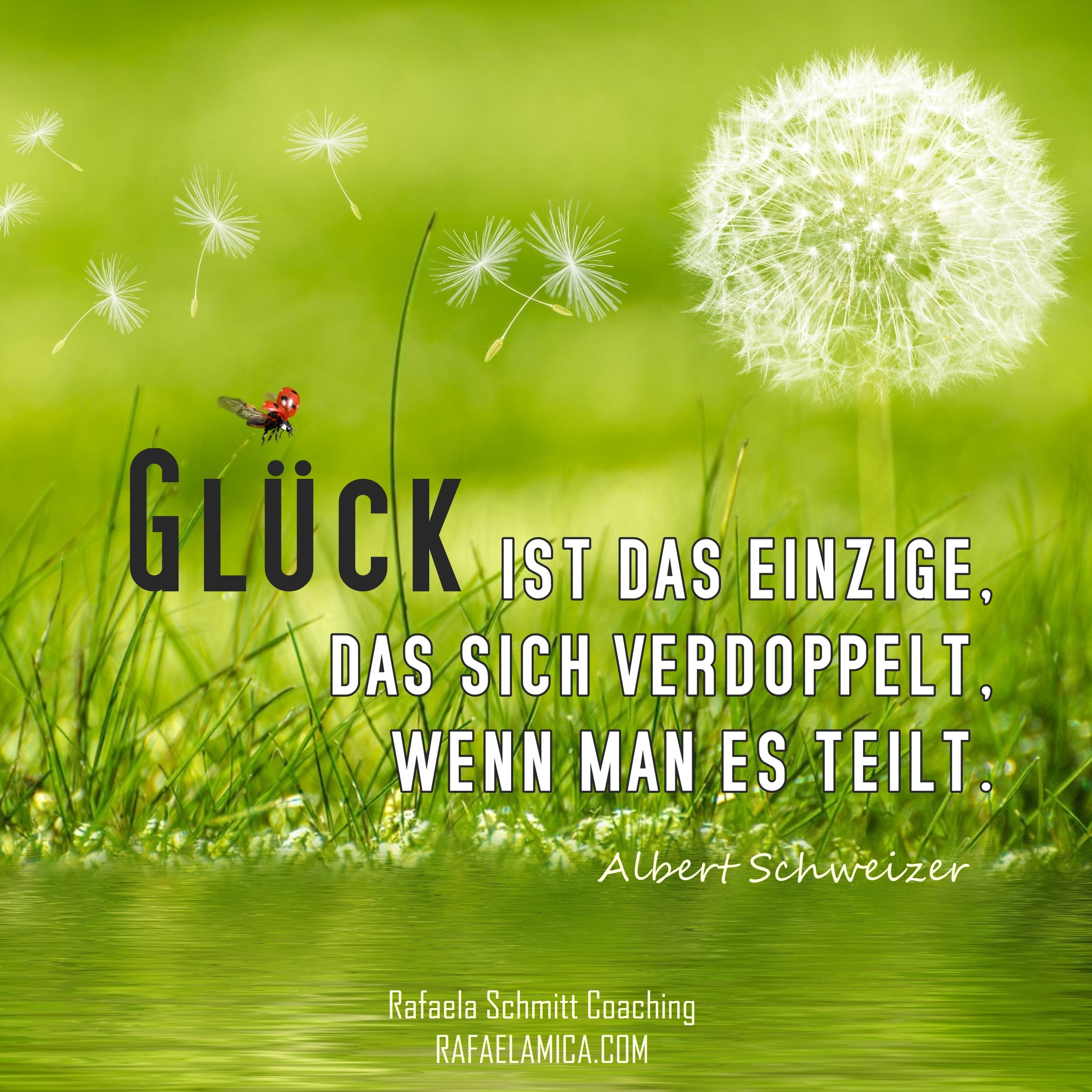 Albert Schweizer quote_Rafaela Schmitt Coaching.jpg