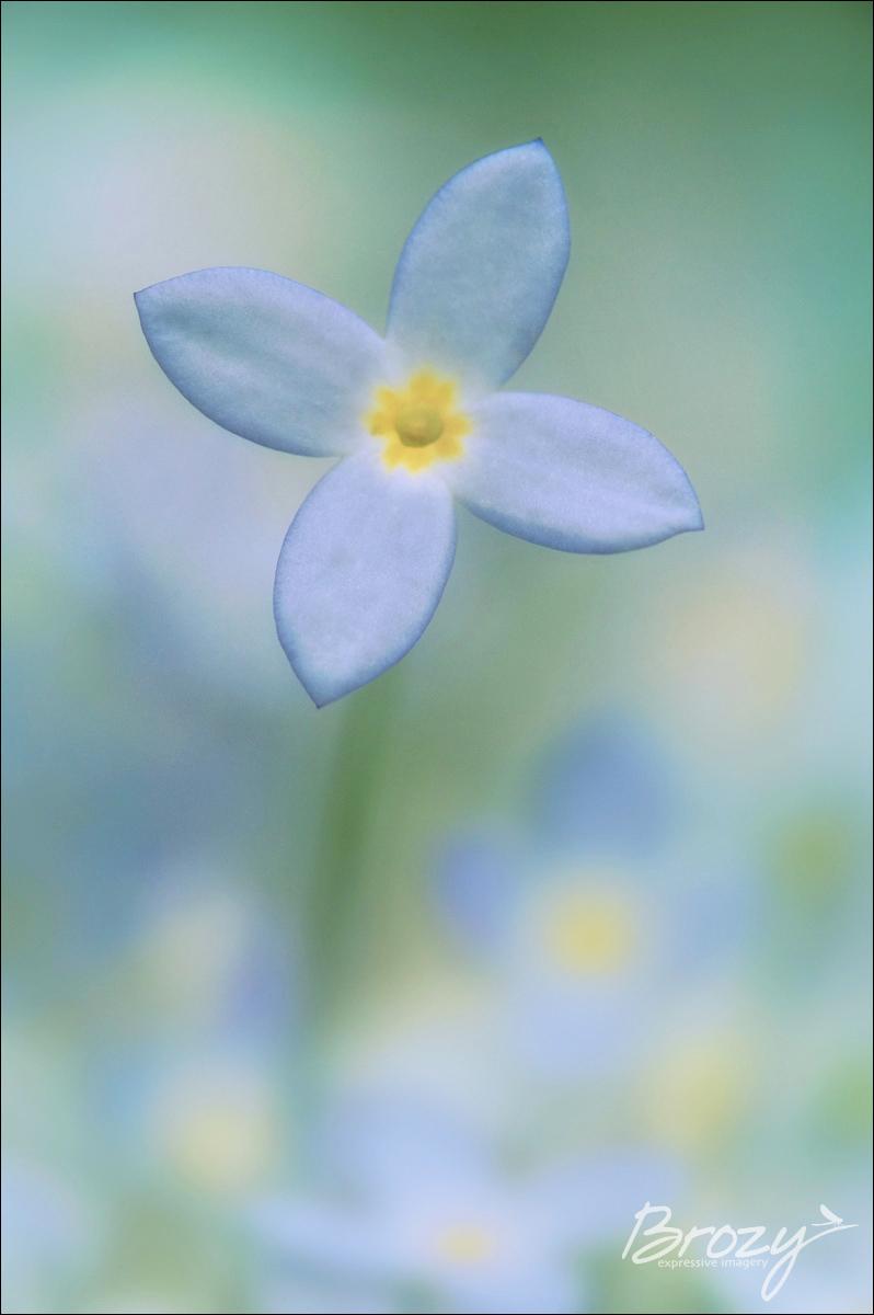 bluet in pastels