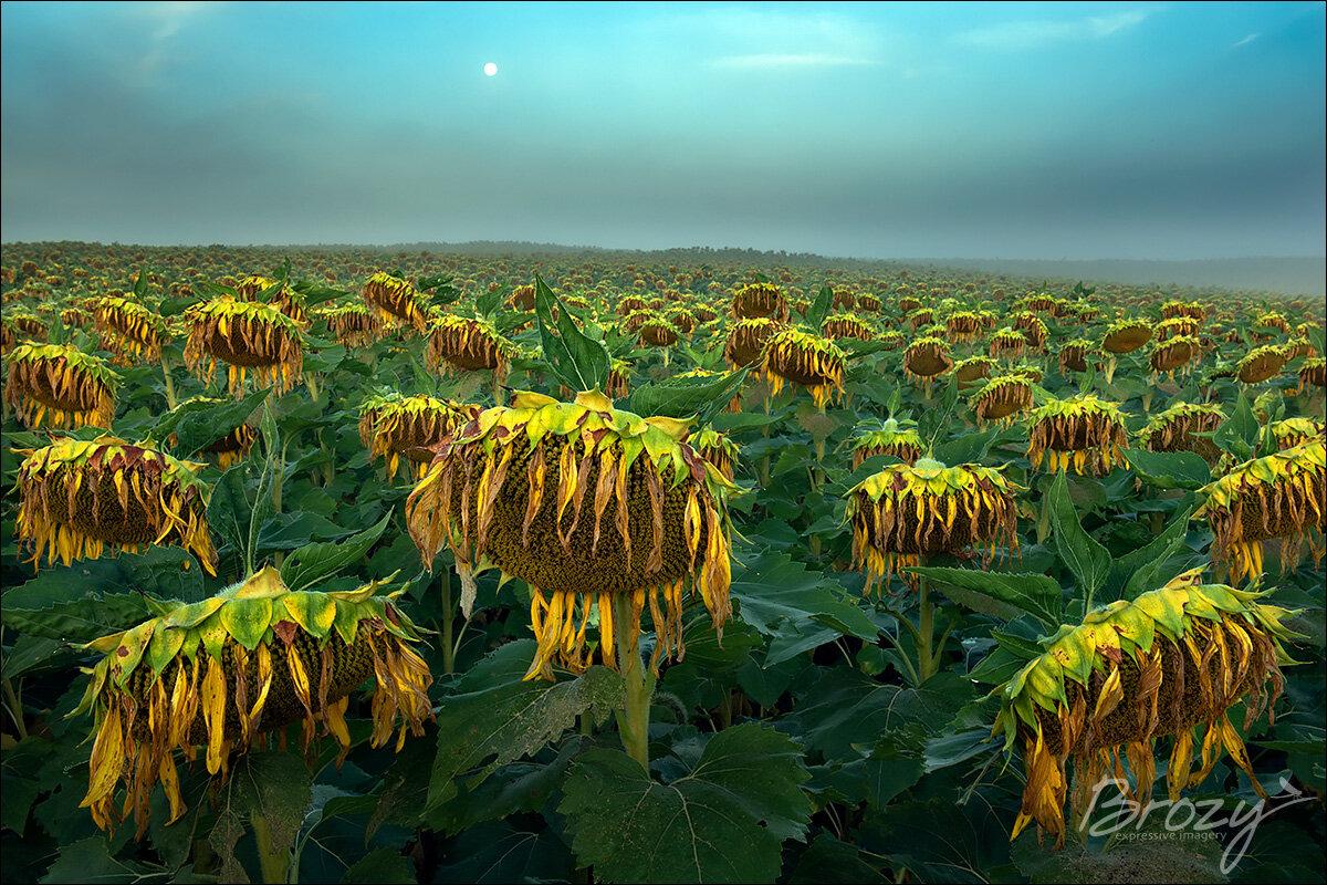 melancholy under a harvest moon