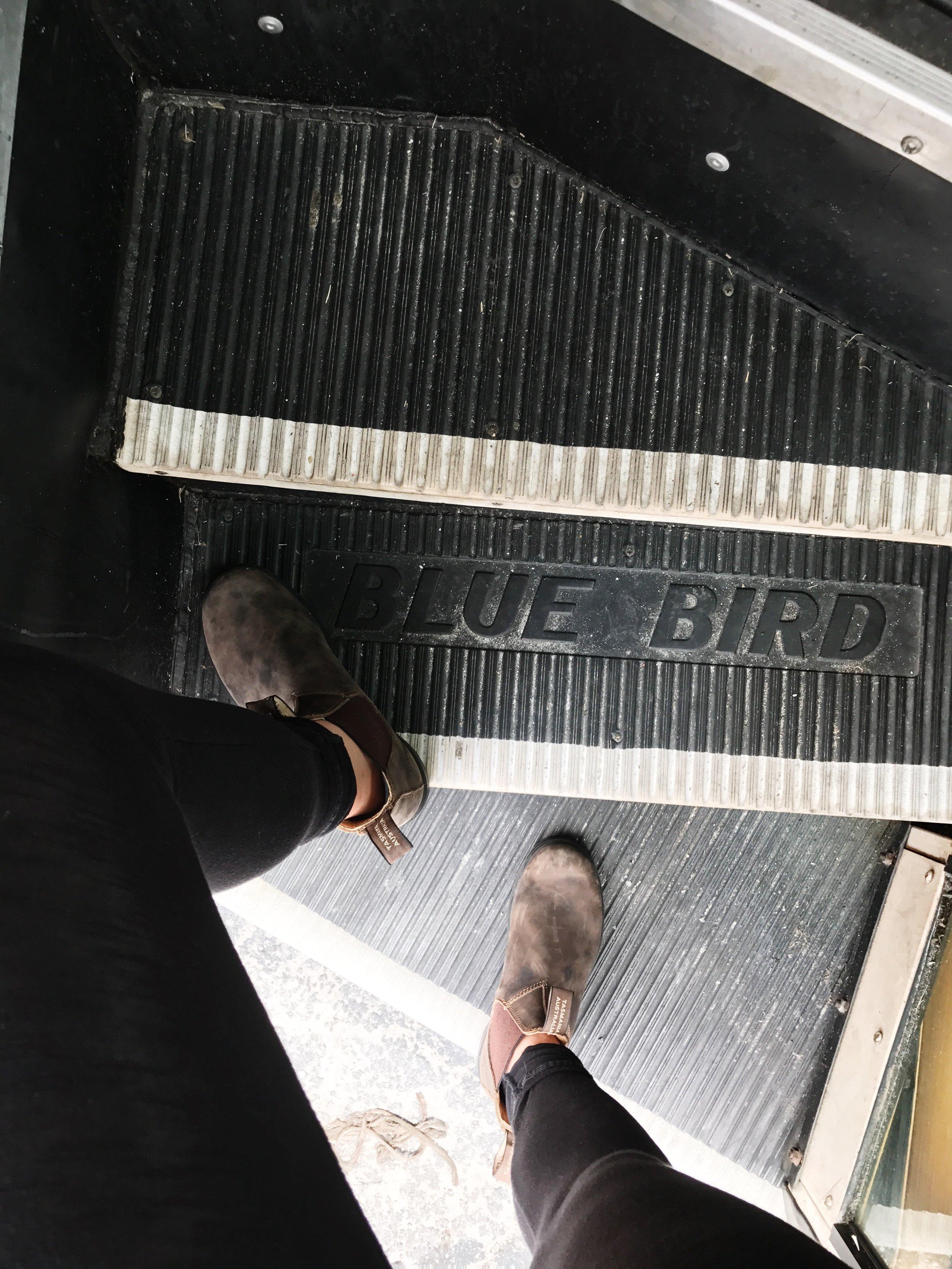 All 'Blue Bird' everything