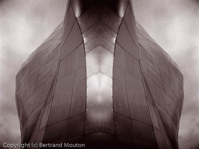 Mouton_010408_015_Composite_Duotone.jpg