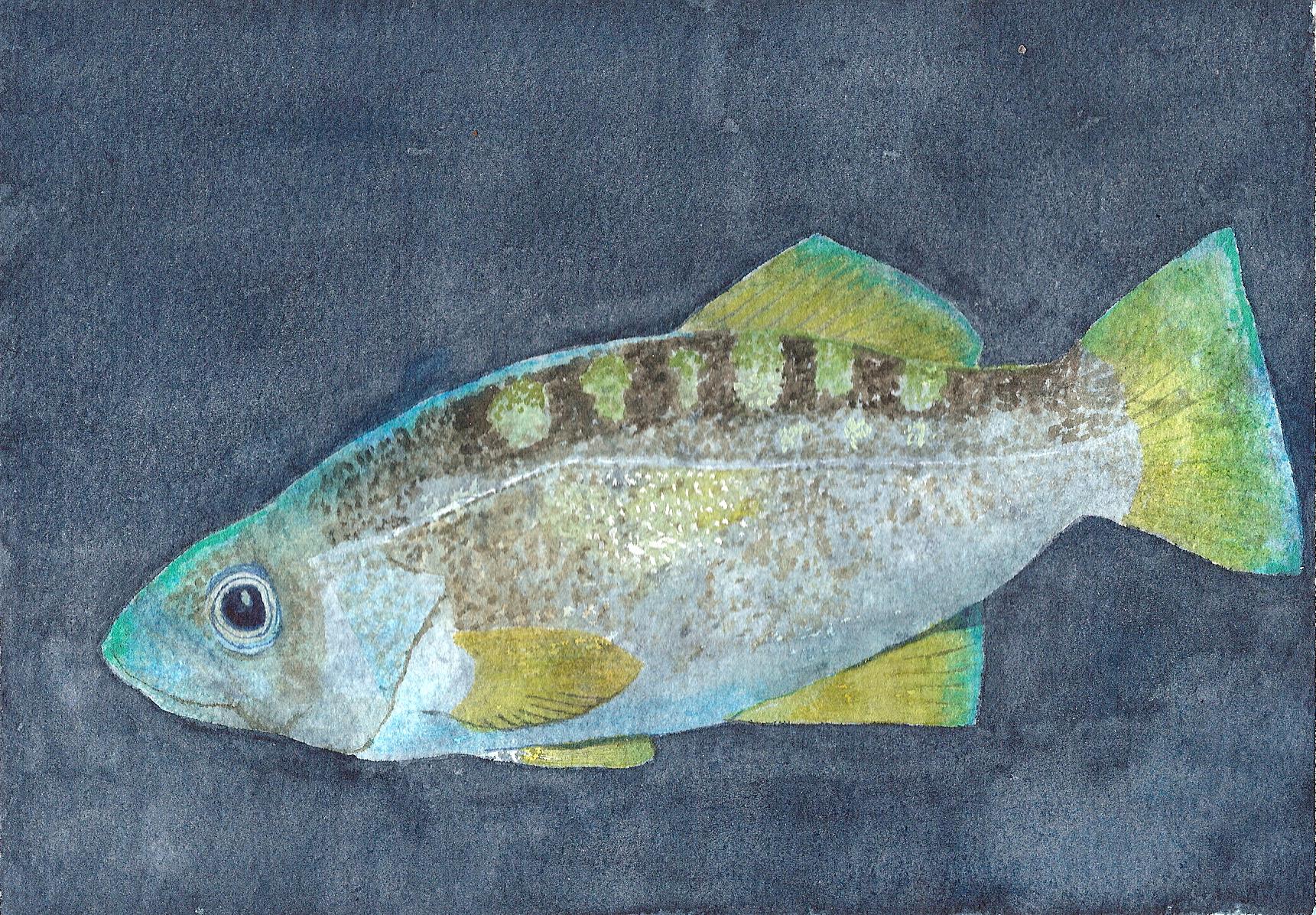 Harry's Fish
