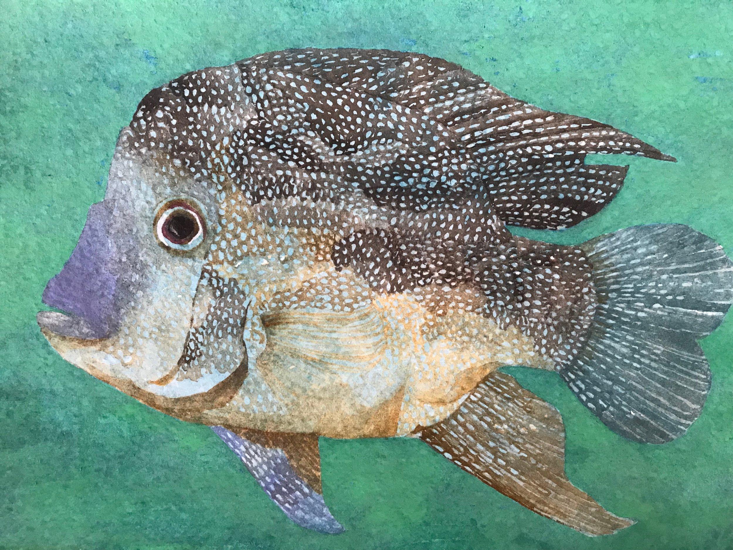 2019 Fish