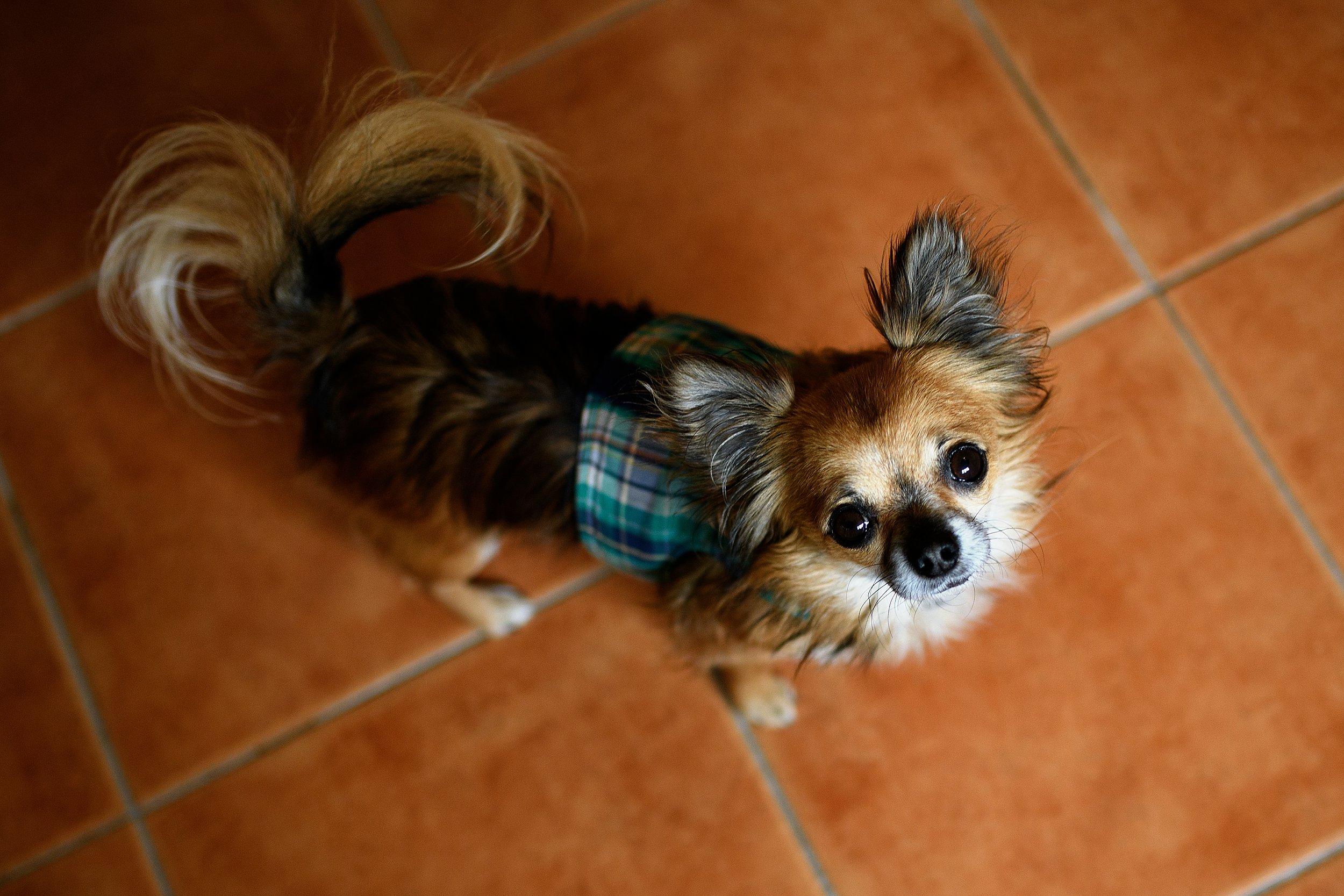 This is Zeus, he was very sweet!
