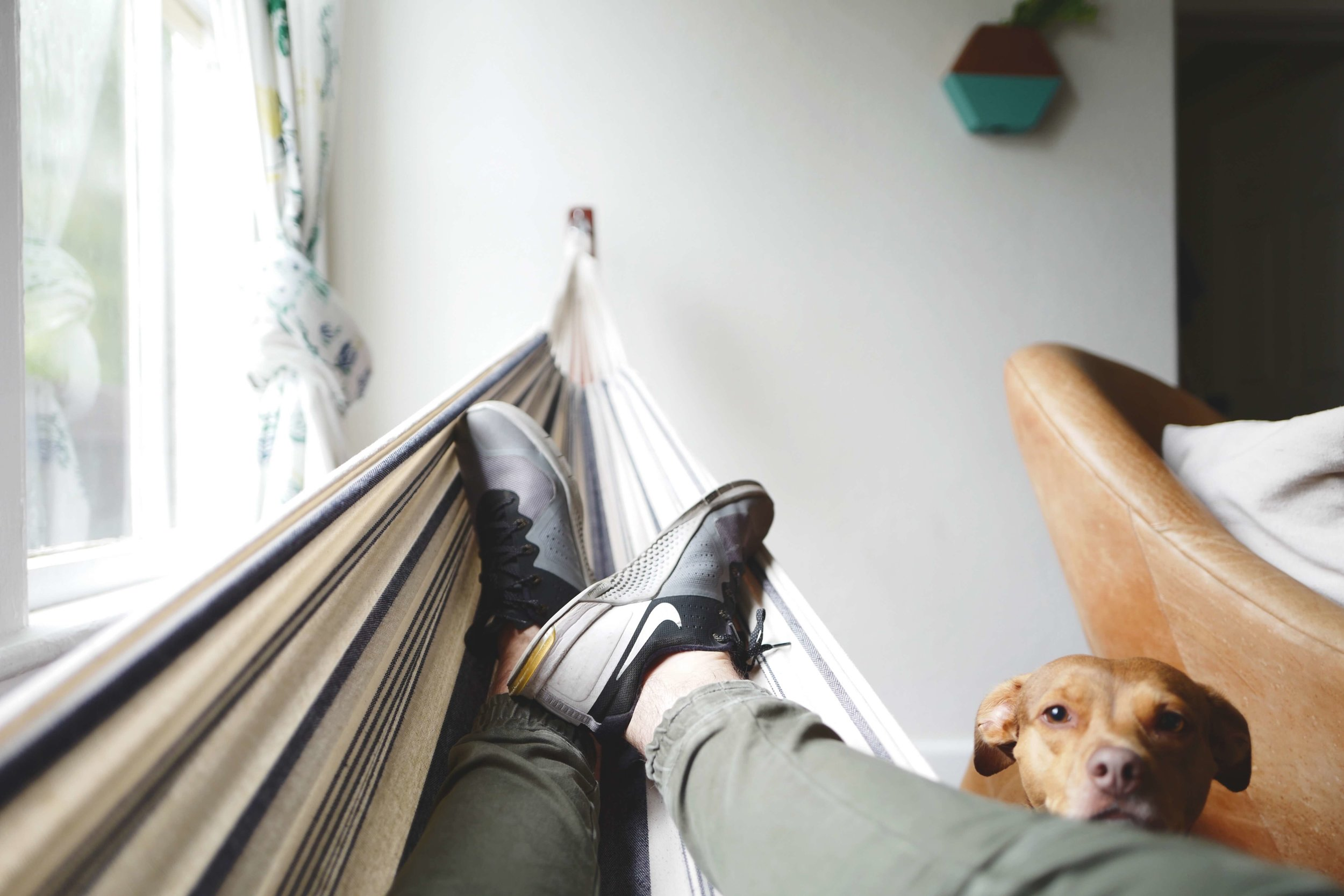 dog-hammock-chill-relax-hatch-tribe