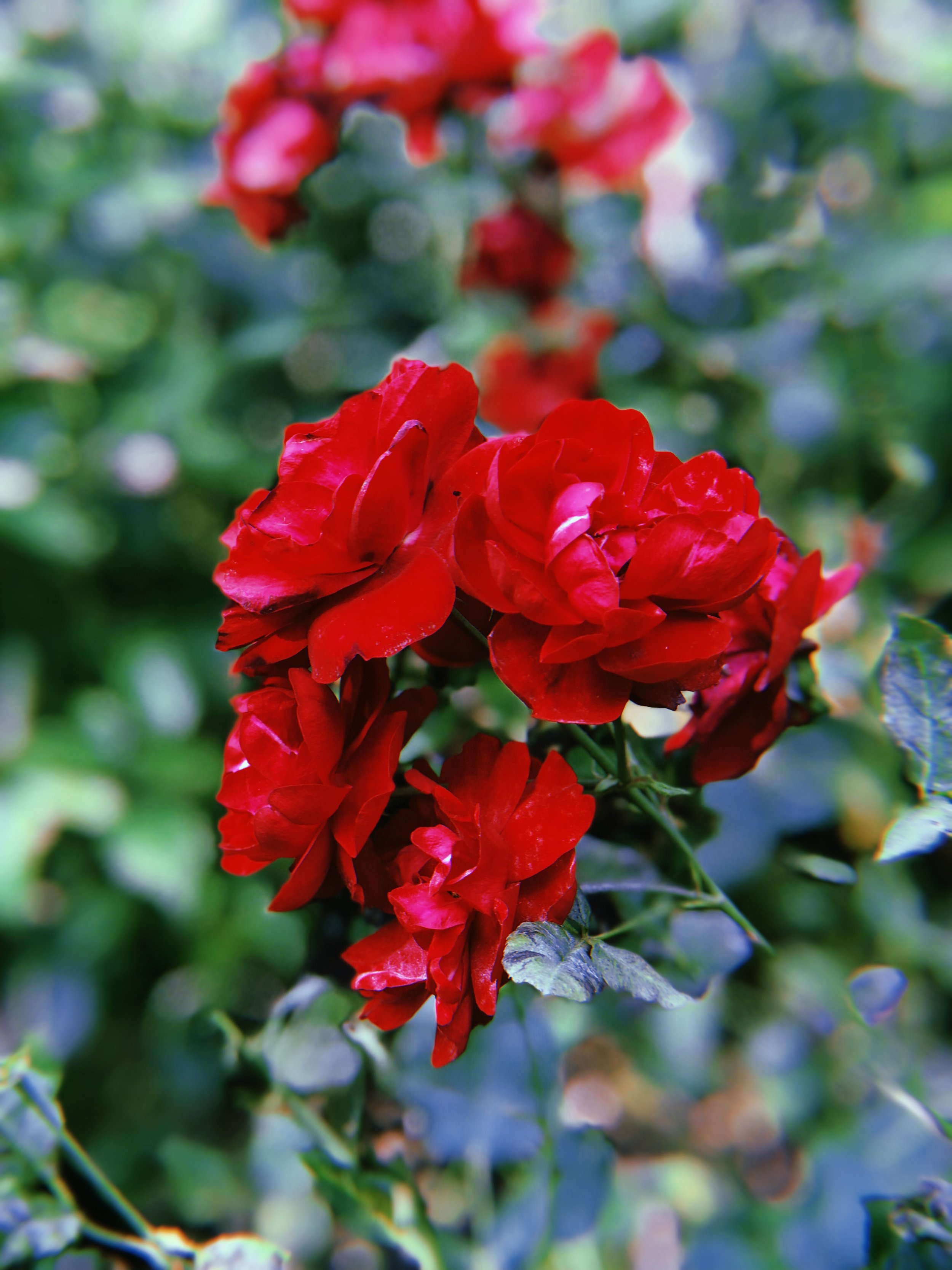 A Flower from Freud's Garden