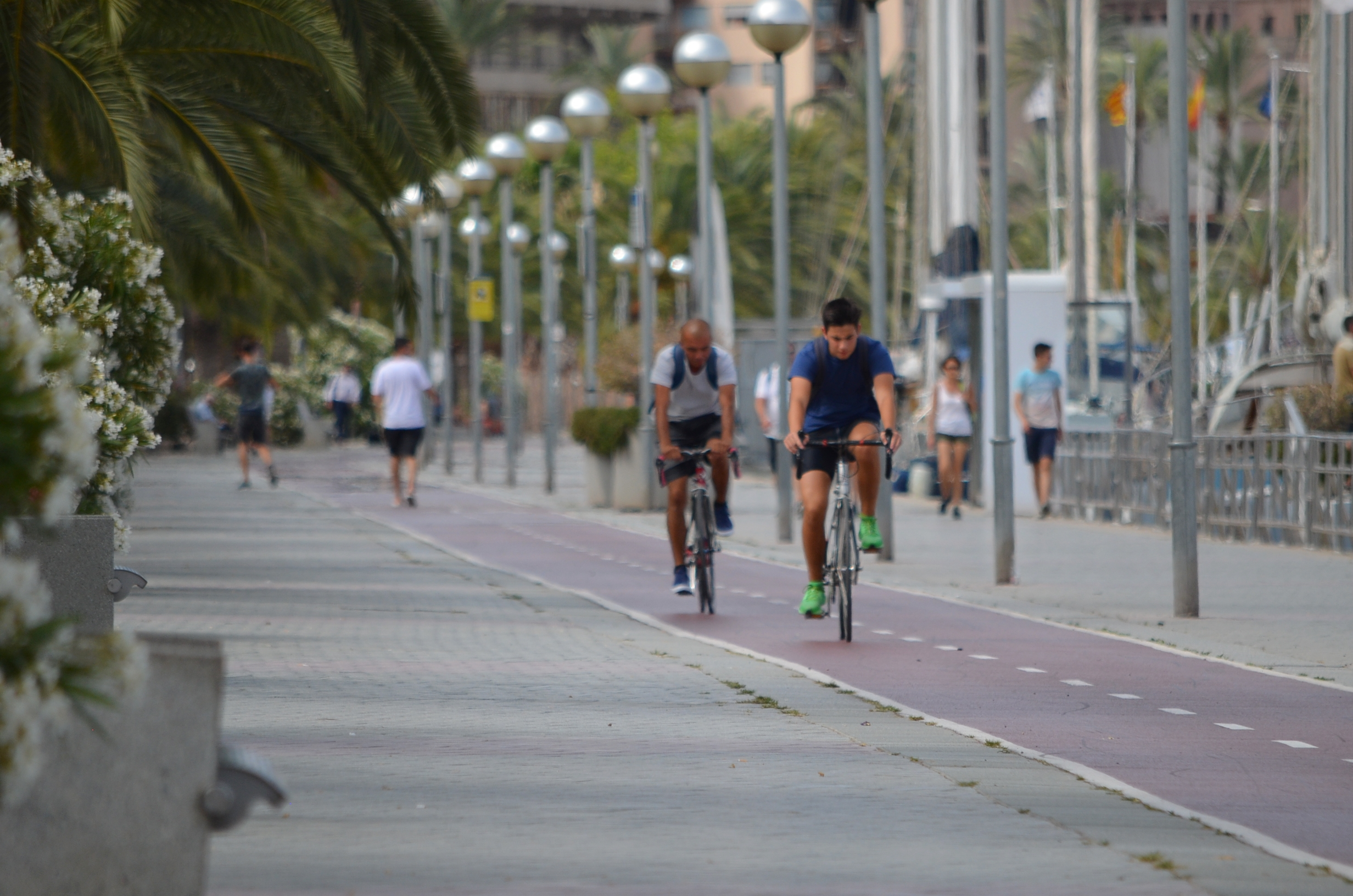 Cyclist along the port of Palma