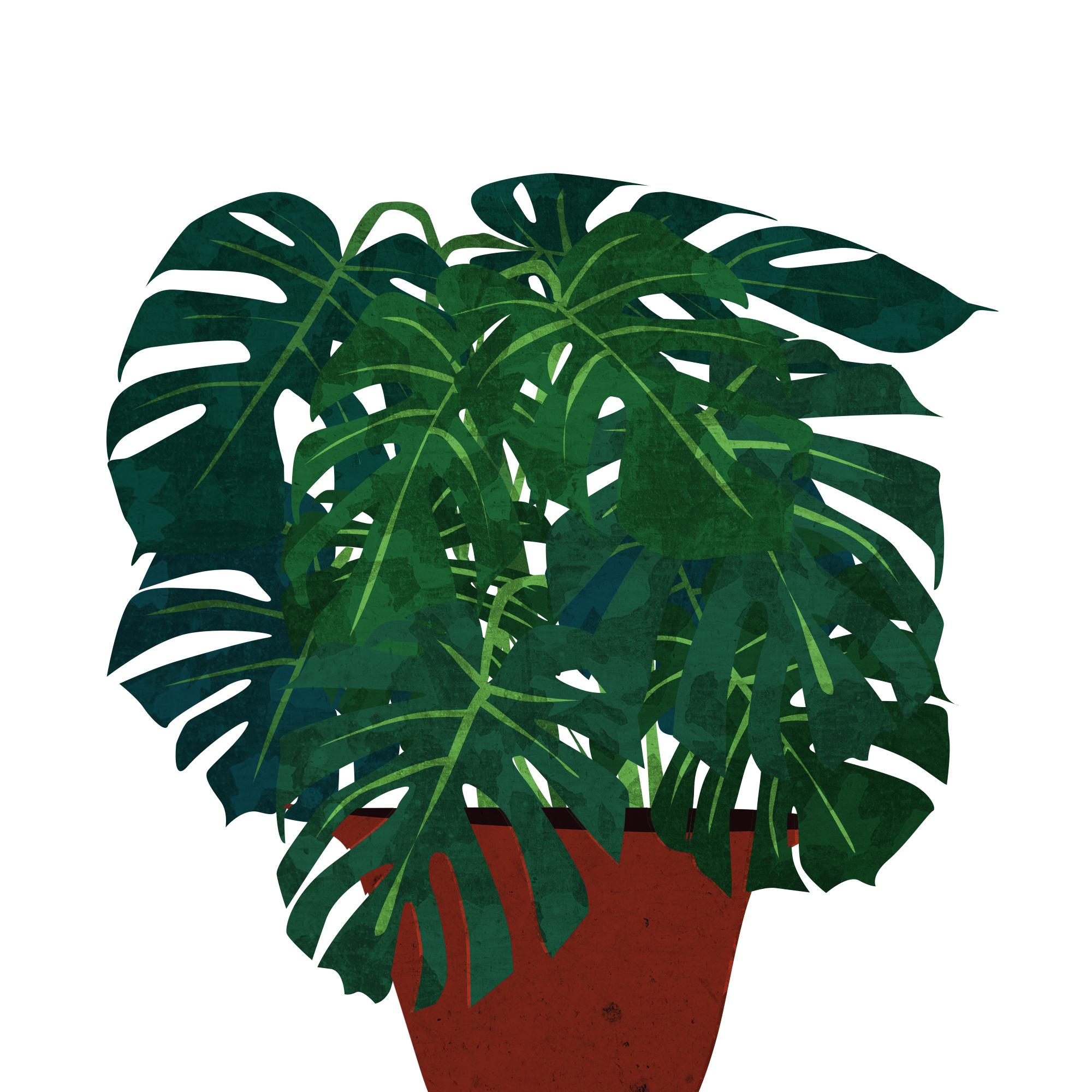 plant square plain.jpg