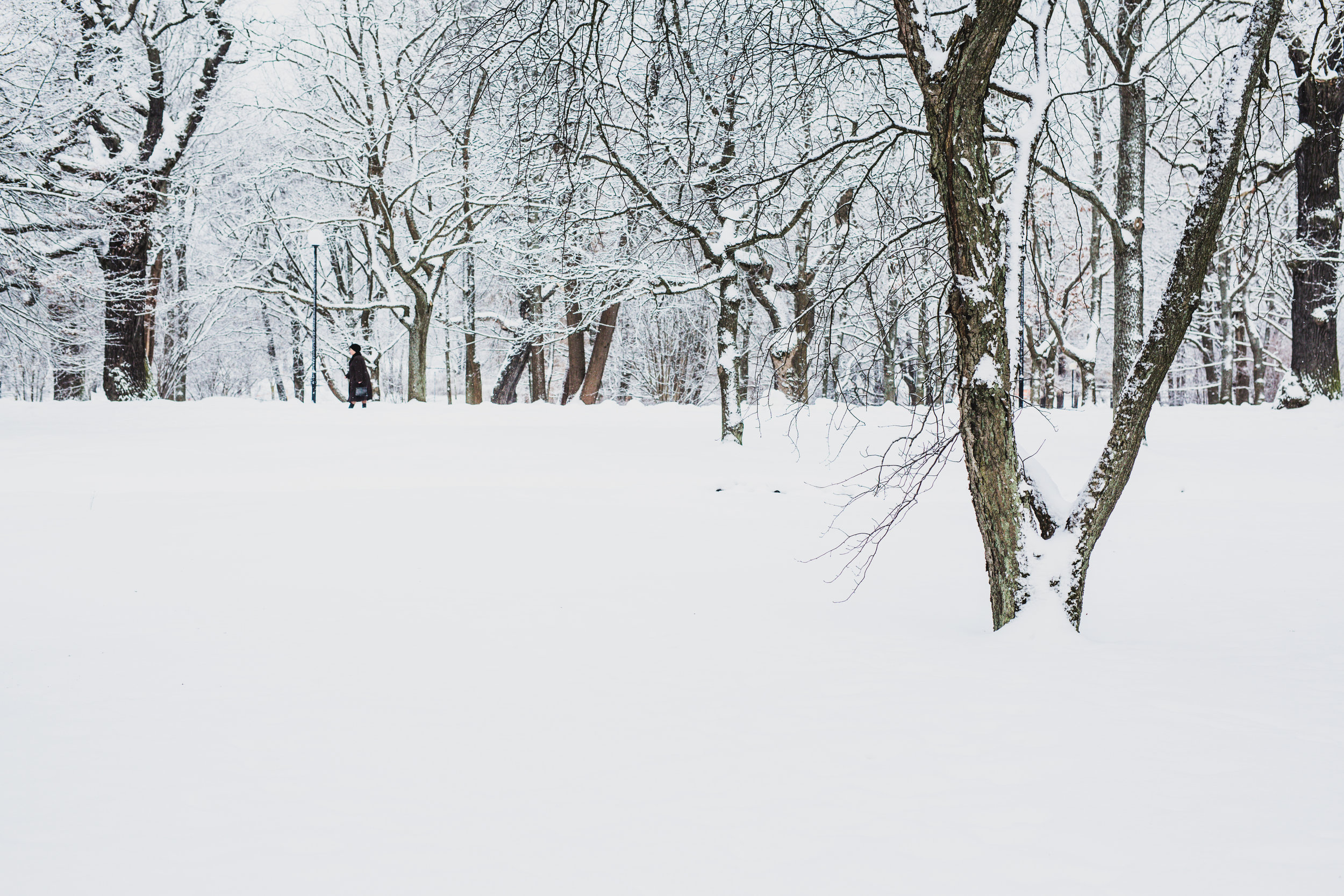 This was one of my happiest days in Tallinn. Dave had to go to Ethiopia, so I was alone in the city. It had snowed heavily all night and so I woke up and walked to the city's largest park and found magic. I took photos until my hands and feet were frozen, and felt so happy, and so alive.