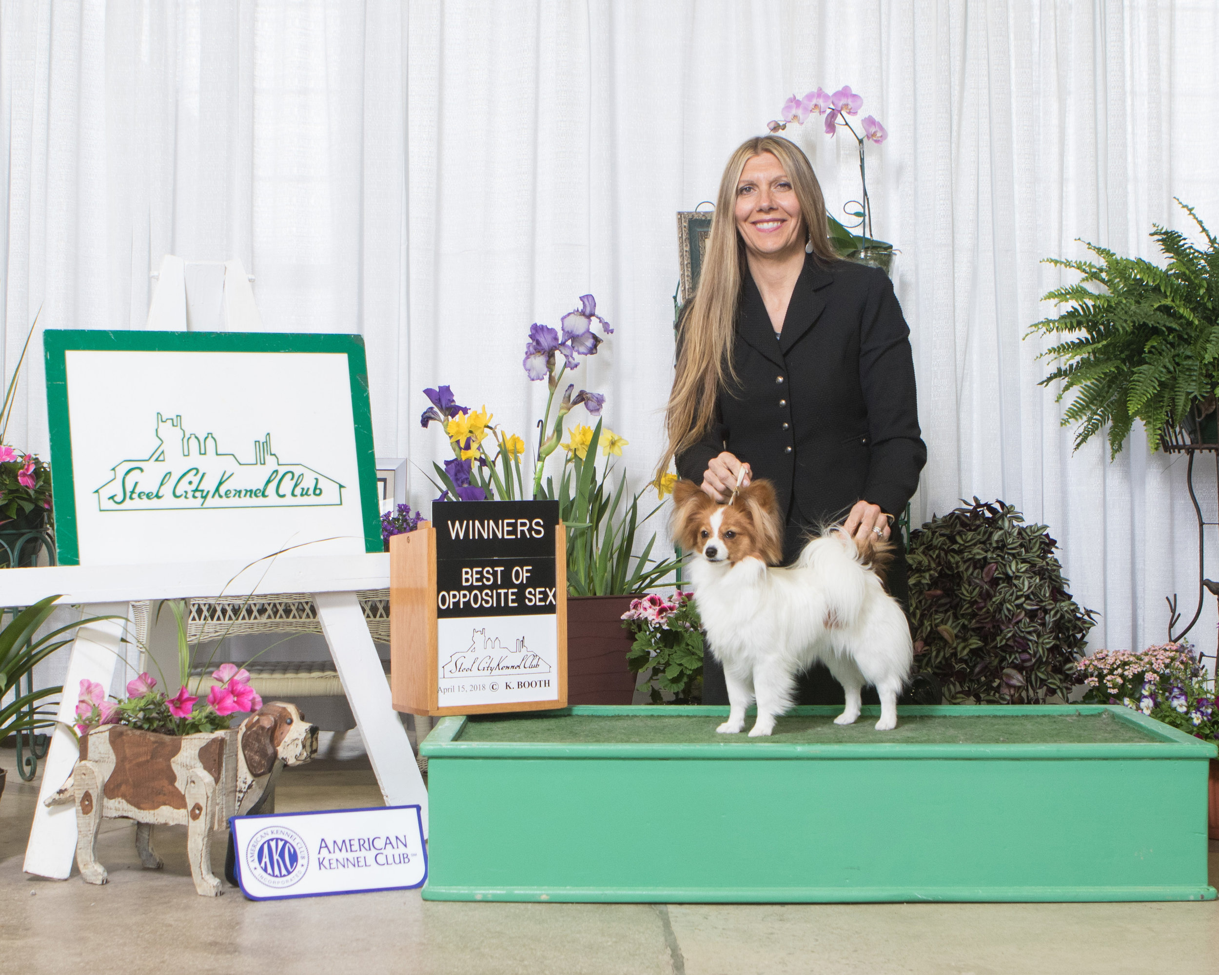 Star at the Steel City Kennel Club Dog Show, 4/15/18. Thank you Norma Smith for handling her!