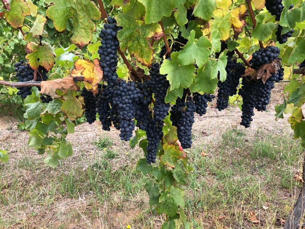 Stormflower Vineyard