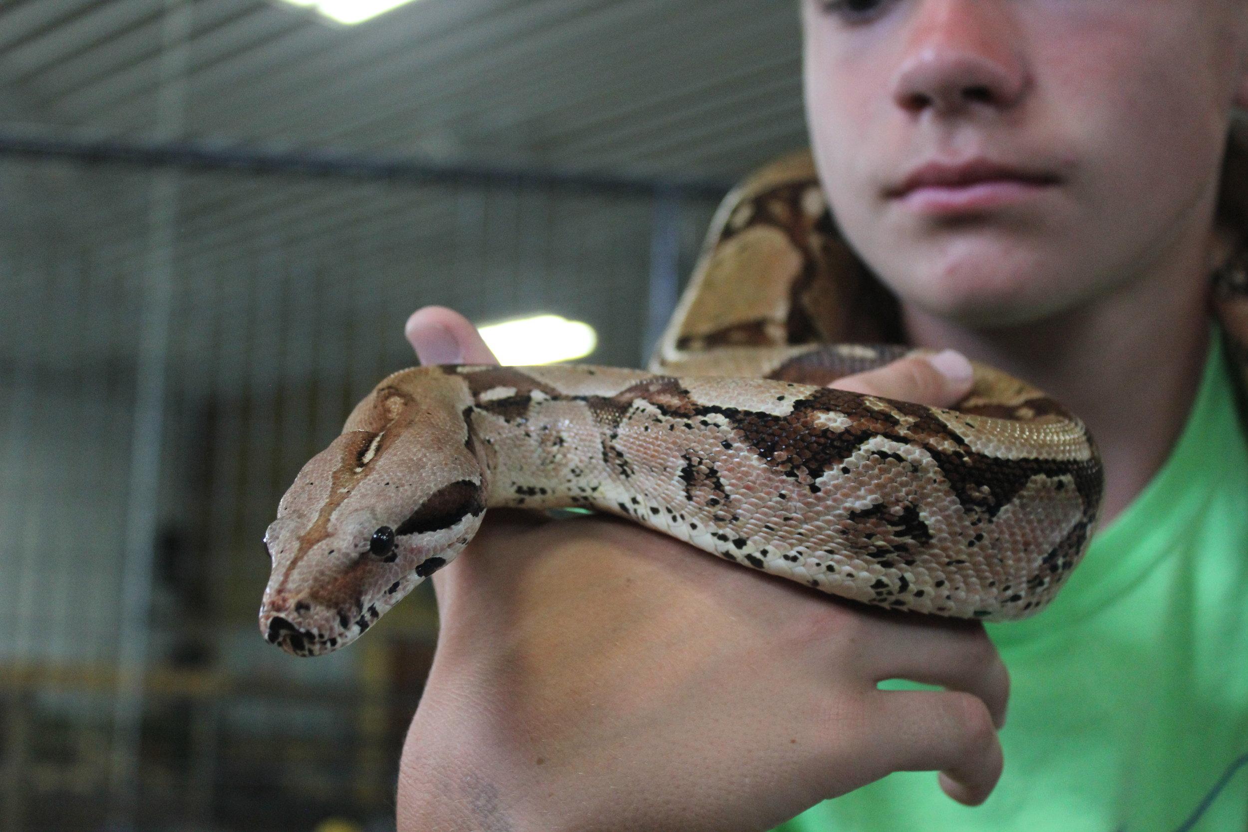 Volunteer, Intern, & Teen Zoo Crew Inquiries - staffing@thecreatureconservancy.orgPhone: (971) 998-8865
