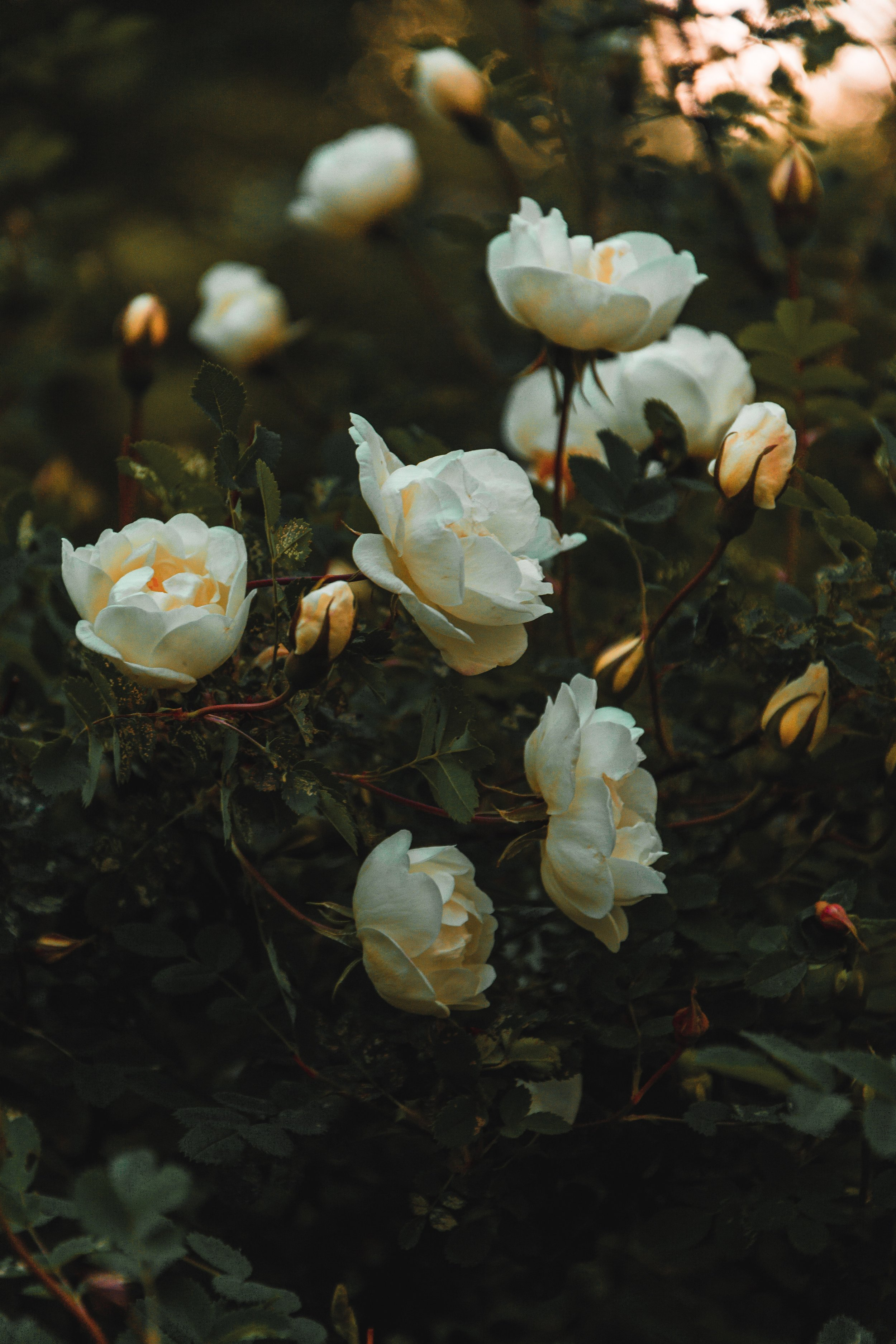 beautiful-blooming-blossom-1122626.jpg