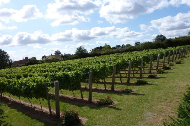 You can taste wine at an award winning Winbirri vineyard in Bramerton-it's only 10 minutes away.