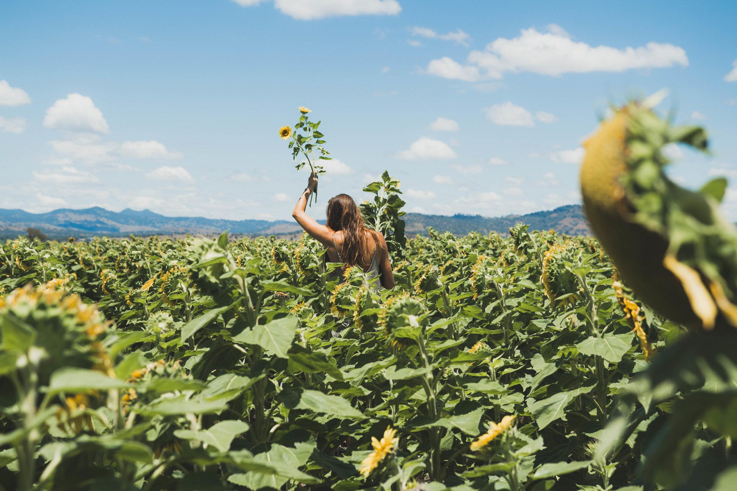 Sunflower WebRes-9.jpg