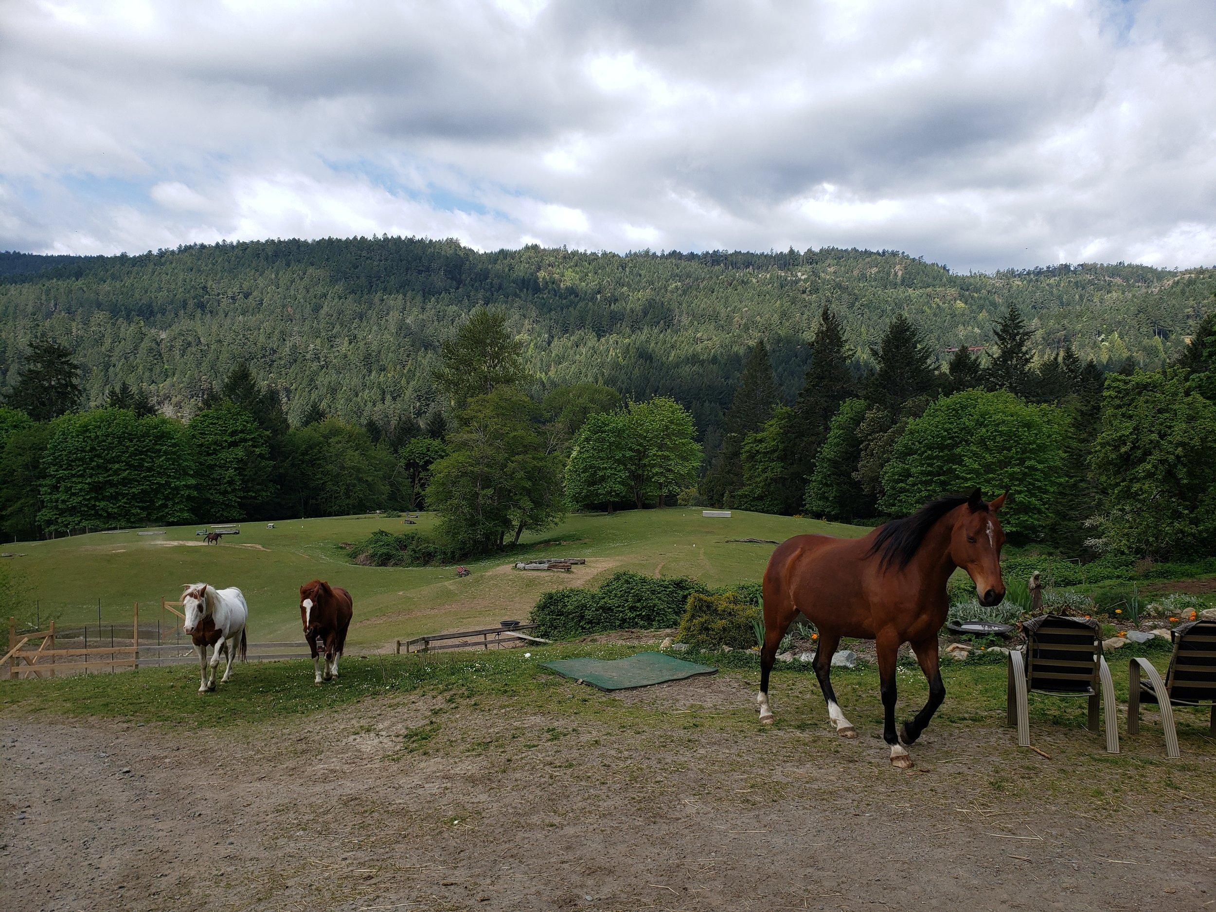 Horses coming in for breakfast.jpg
