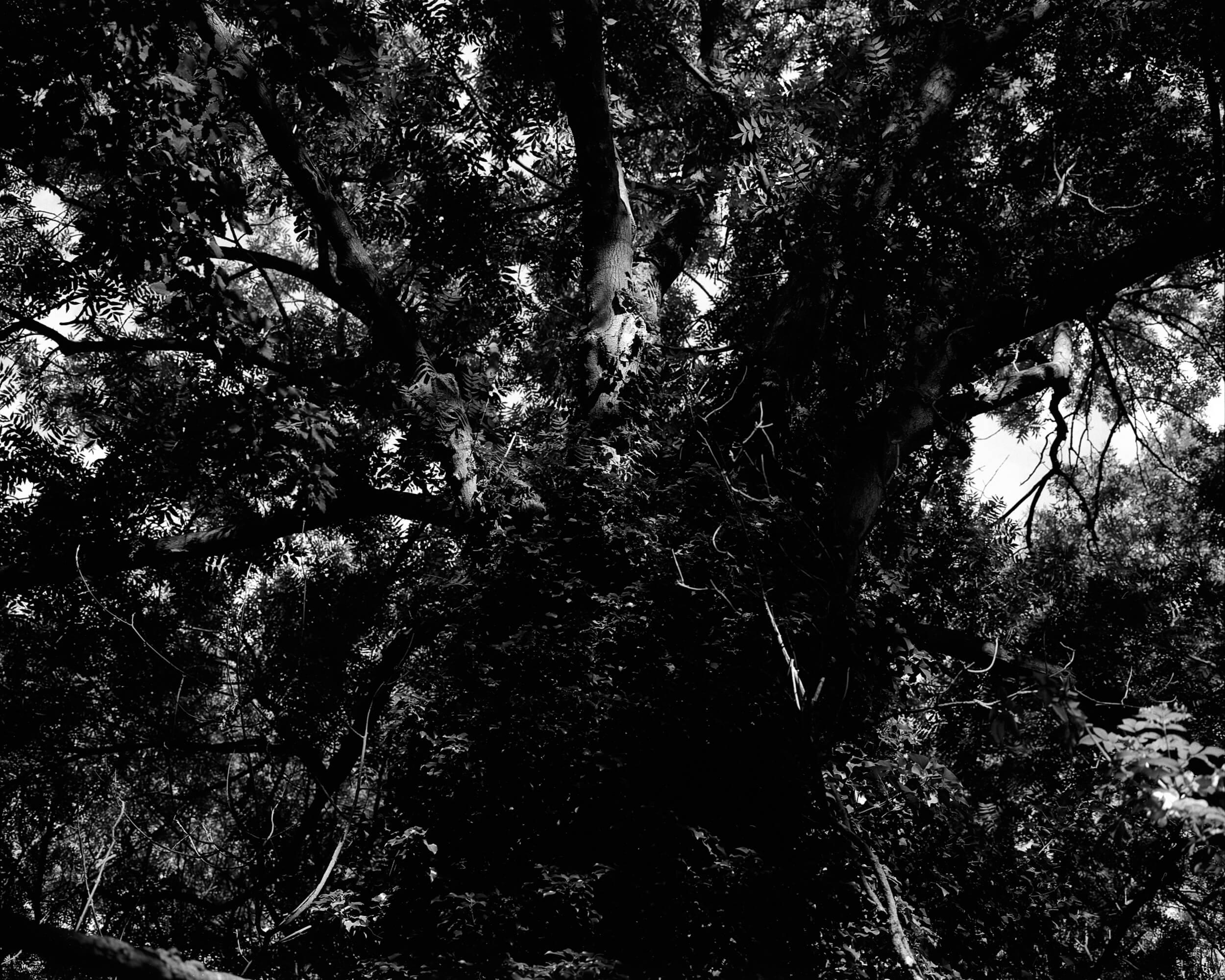 Darkness-At-Noon-2.jpg
