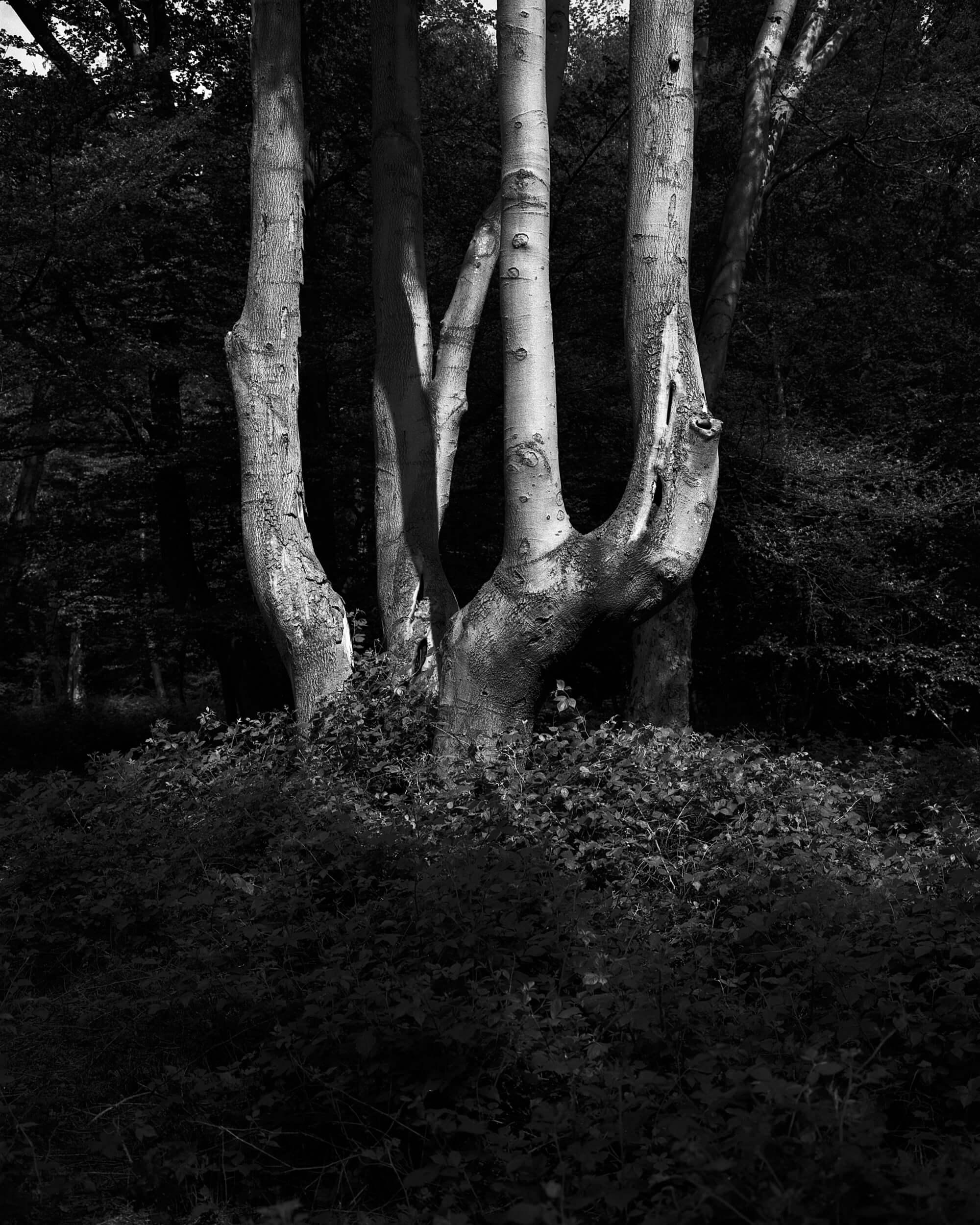 Darkness-At-Noon-3.jpg