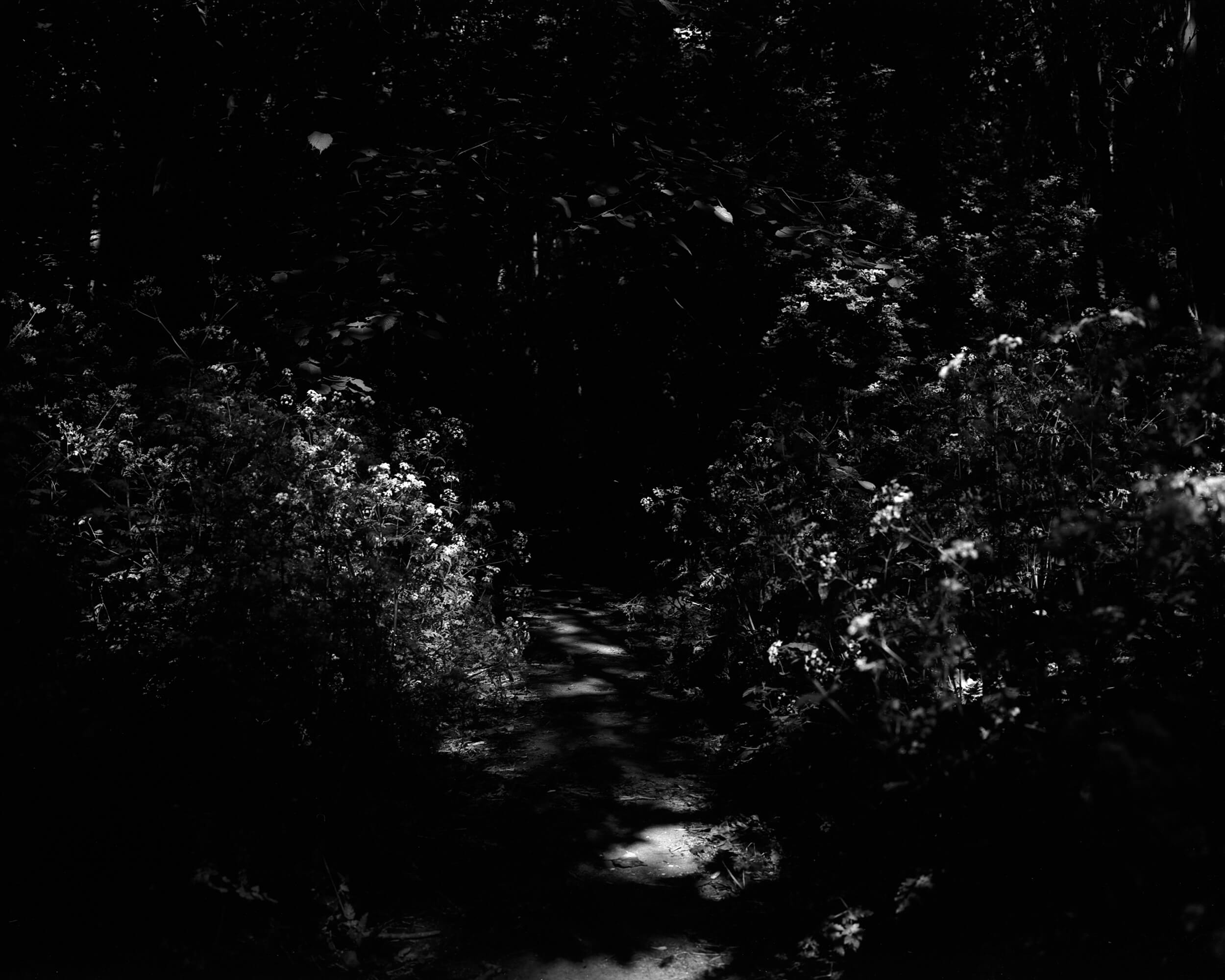 Darkness-At-Noon-8.jpg