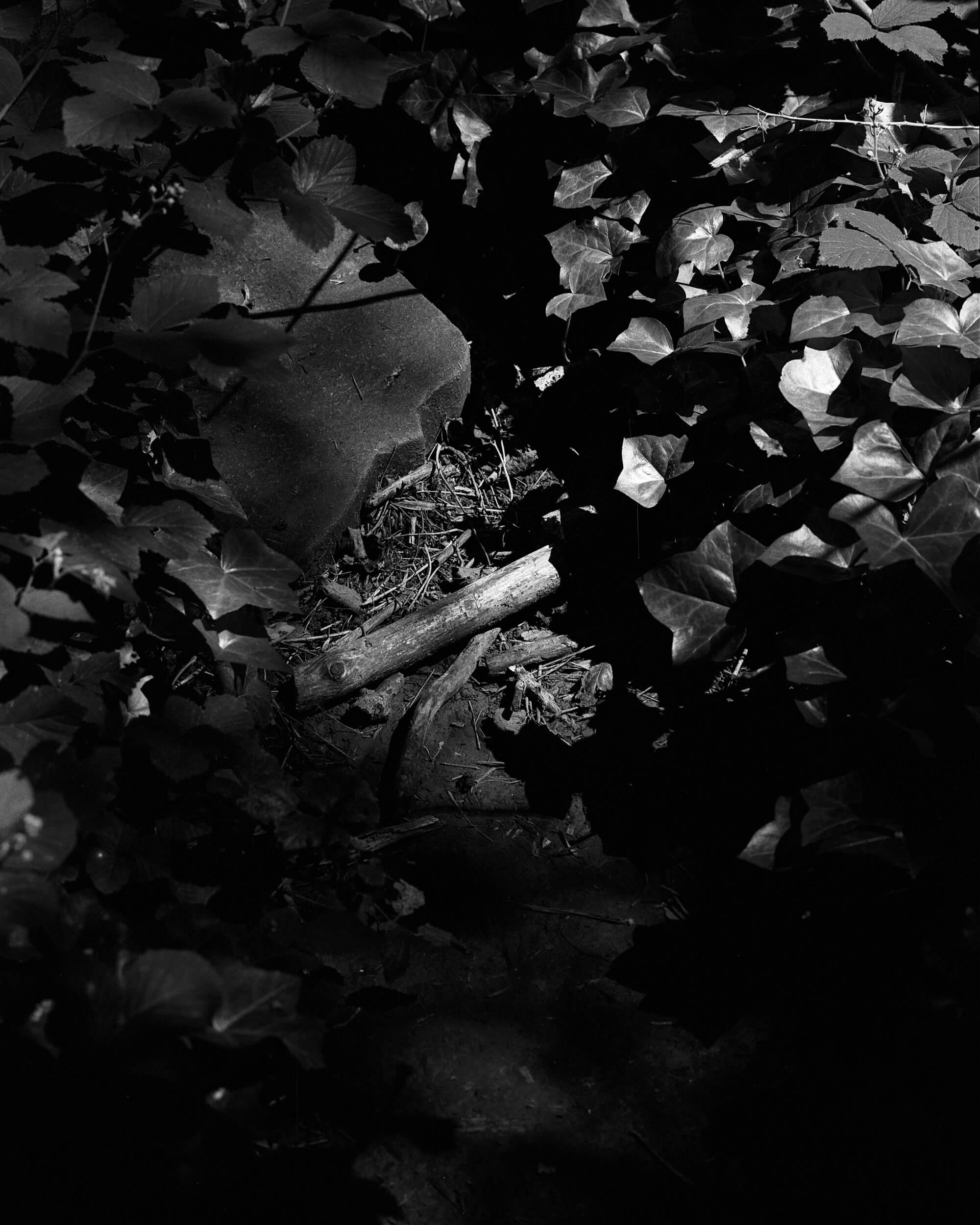 Darkness-At-Noon-11.jpg