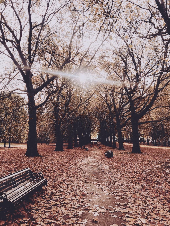 Autumn fall park