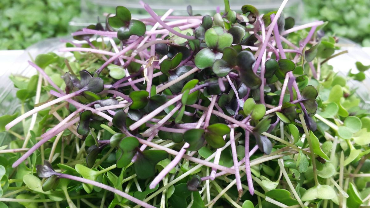 sweet peas.jpg