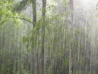 downpour2.jpg